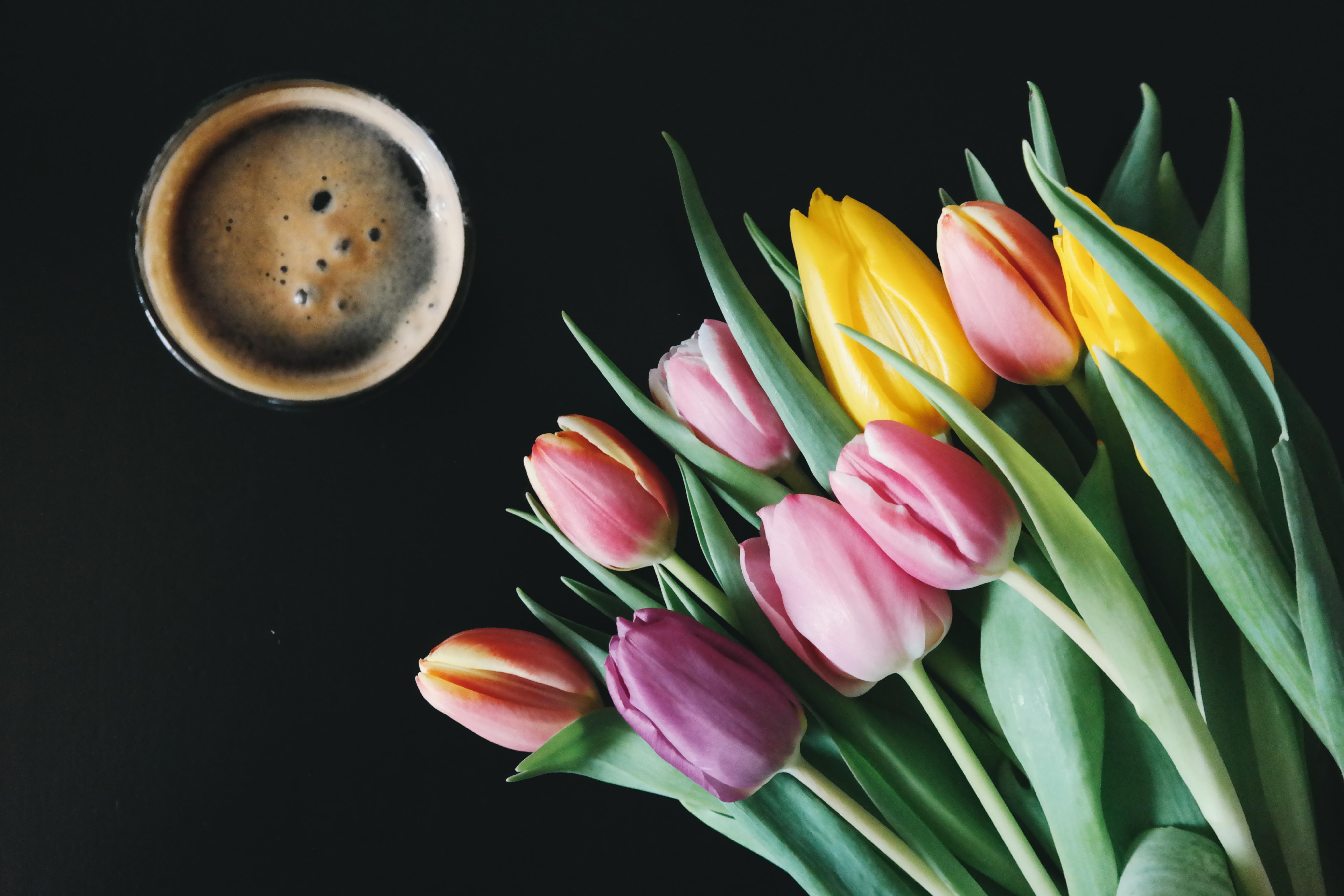 Tea, Color, Colorful, Cup, Flower, HQ Photo