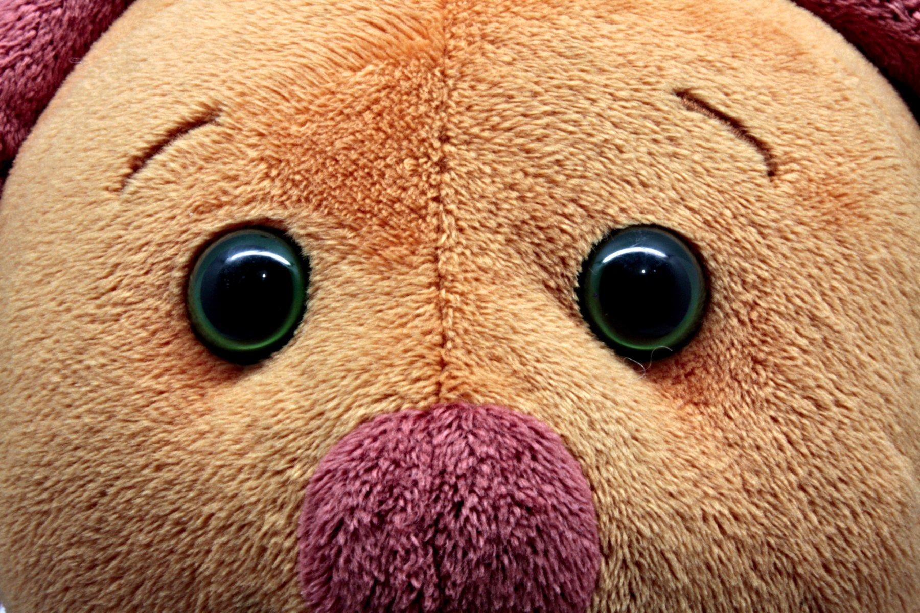 Teddy bear, Bear, Brown, Child, Childhood, HQ Photo