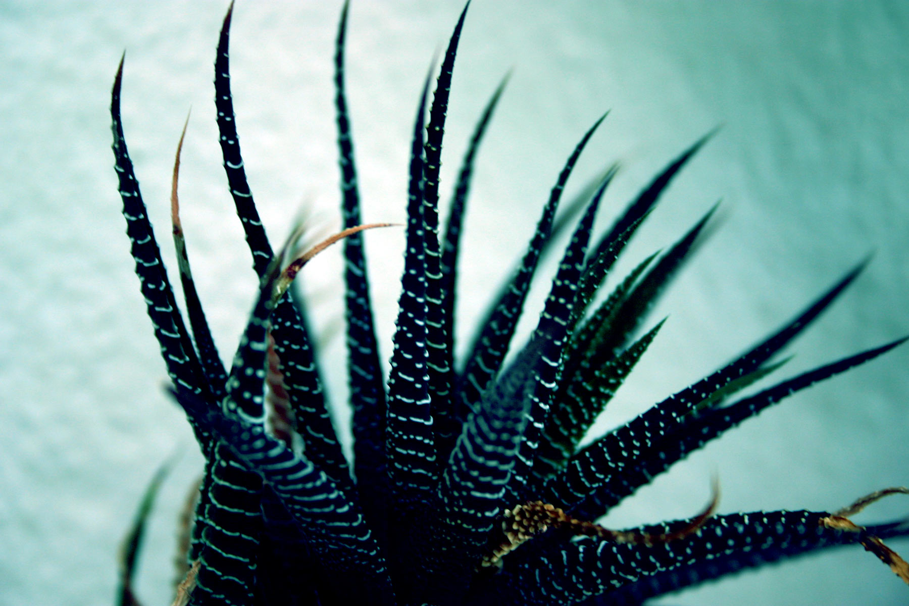 Tentacles, Spikes, Plant, HQ Photo