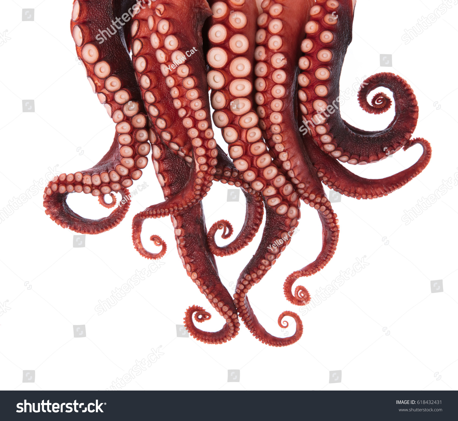 Tentacles Octopus Isolated On White Background Stock Photo (Royalty ...