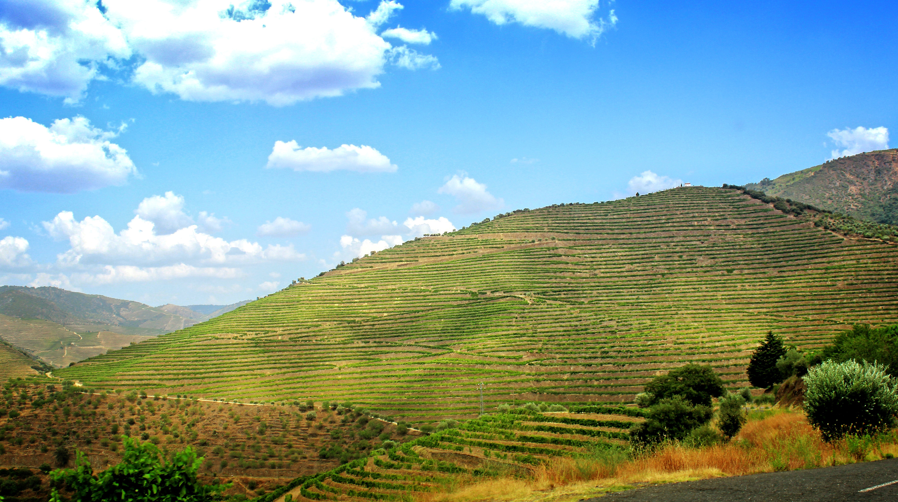Terraced vineyards - walled terraces - douro valley photo