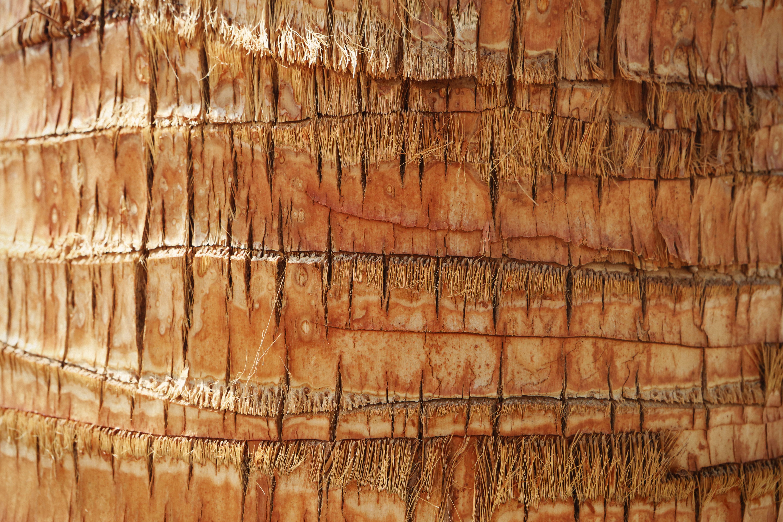 bark of palm tree, Texture, Bark, HQ Photo