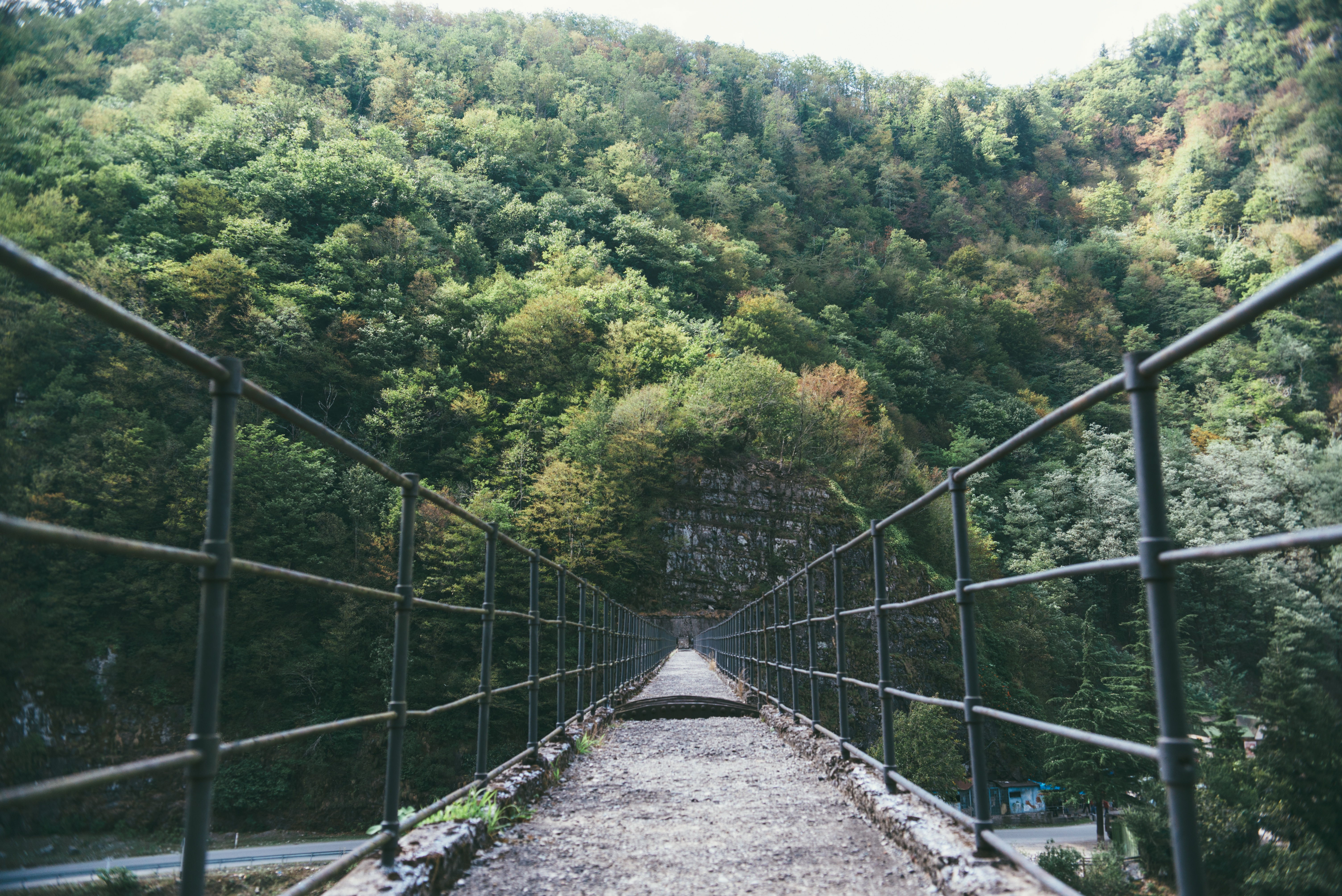 The Bridge, Pathway, Route, Thick, Tree, HQ Photo