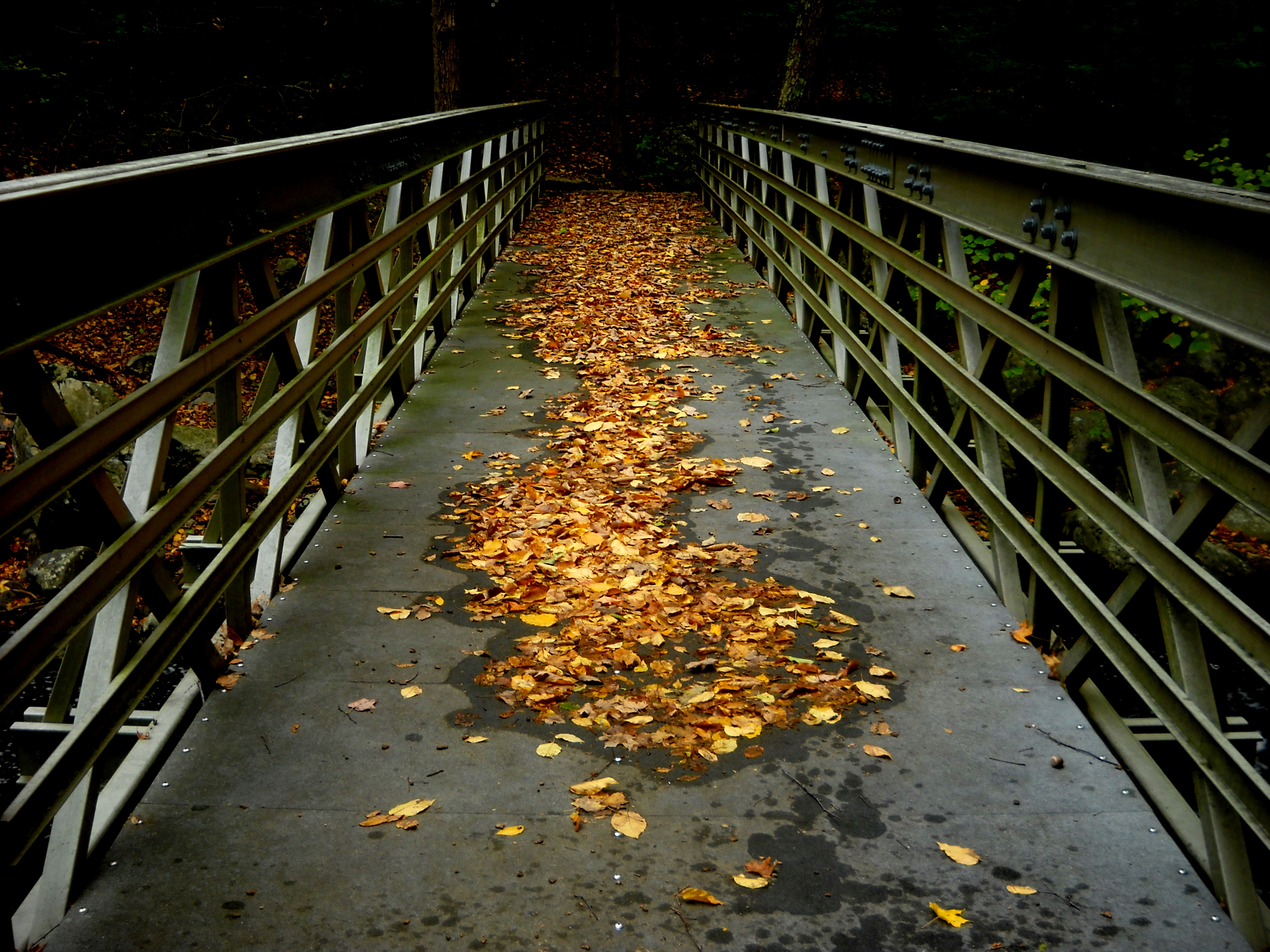 The Bridge, Bridge, Leaves, HQ Photo