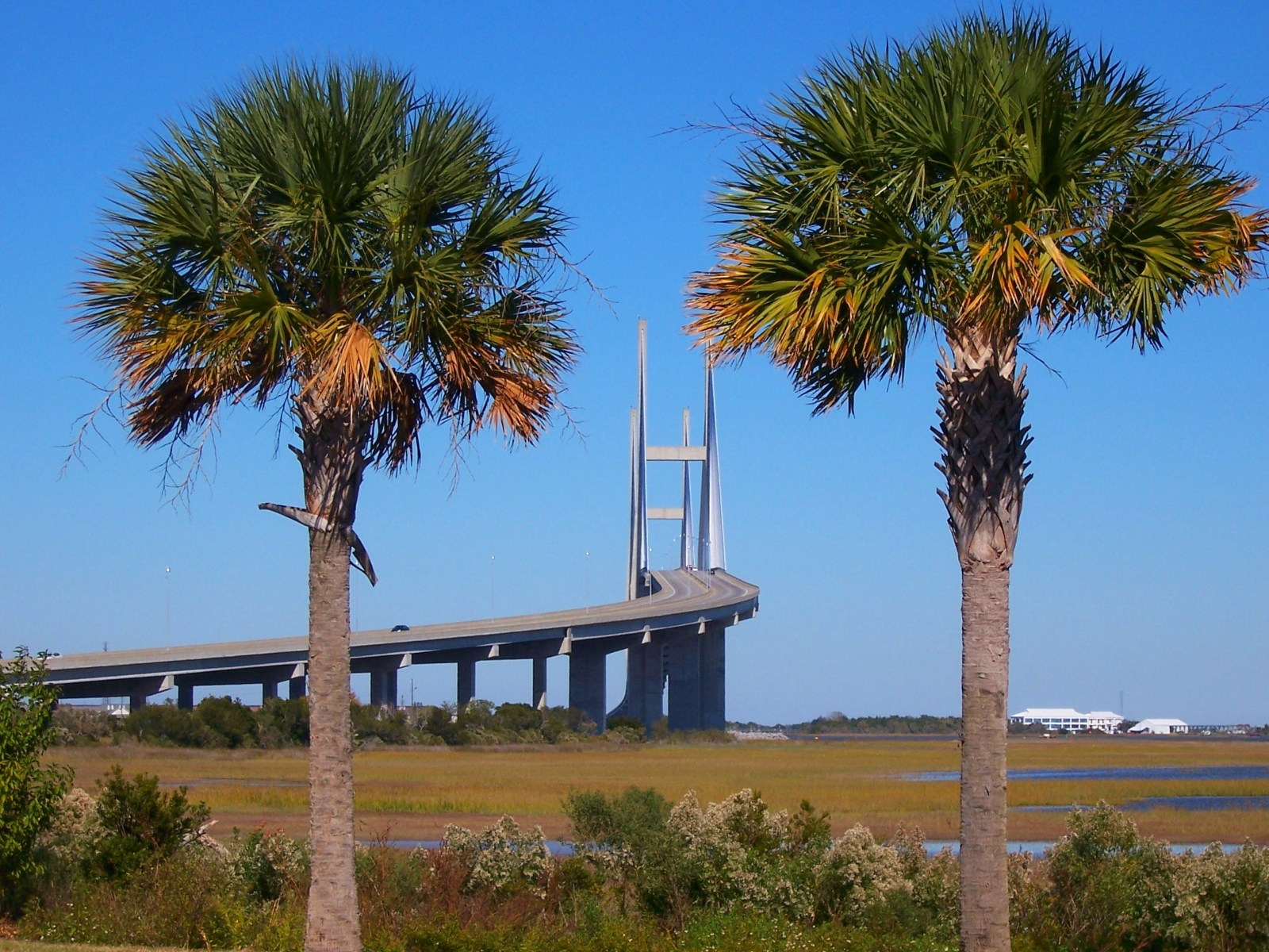 The bridge, Bridge, Bspo06, Concrete, Palms, HQ Photo
