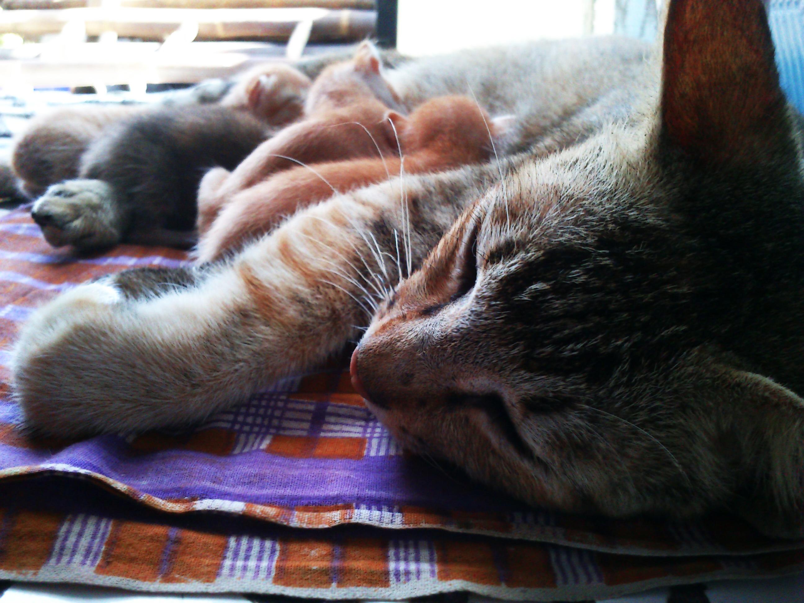 The cat family 2 photo
