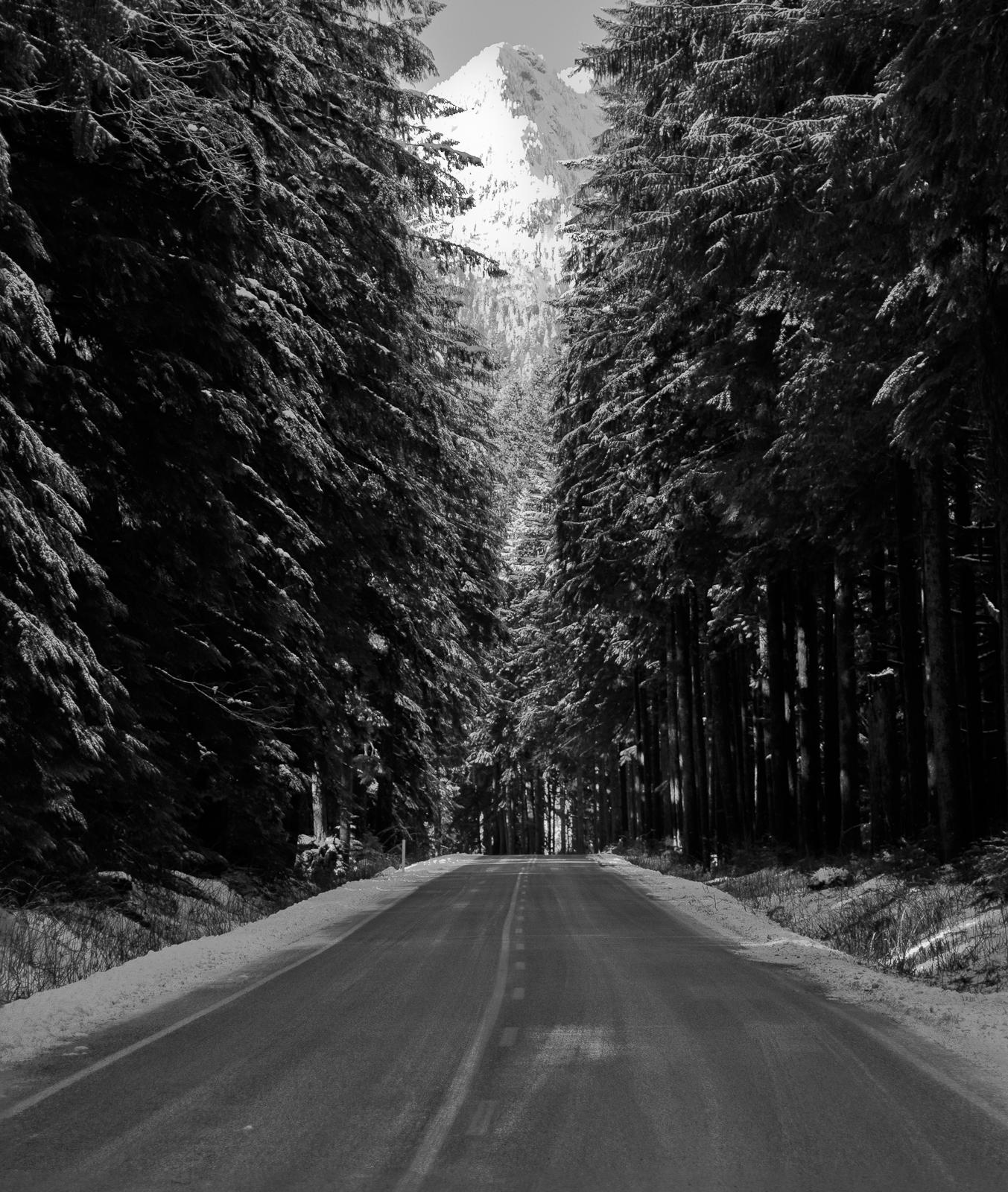 Forest Road | Tau Zero