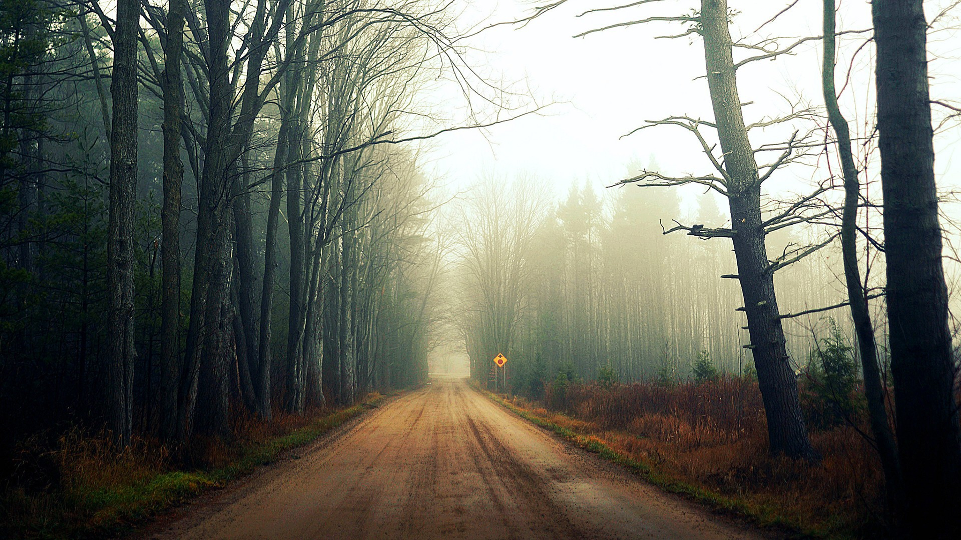 Mist on a forest road wallpapers and images - wallpapers, pictures ...