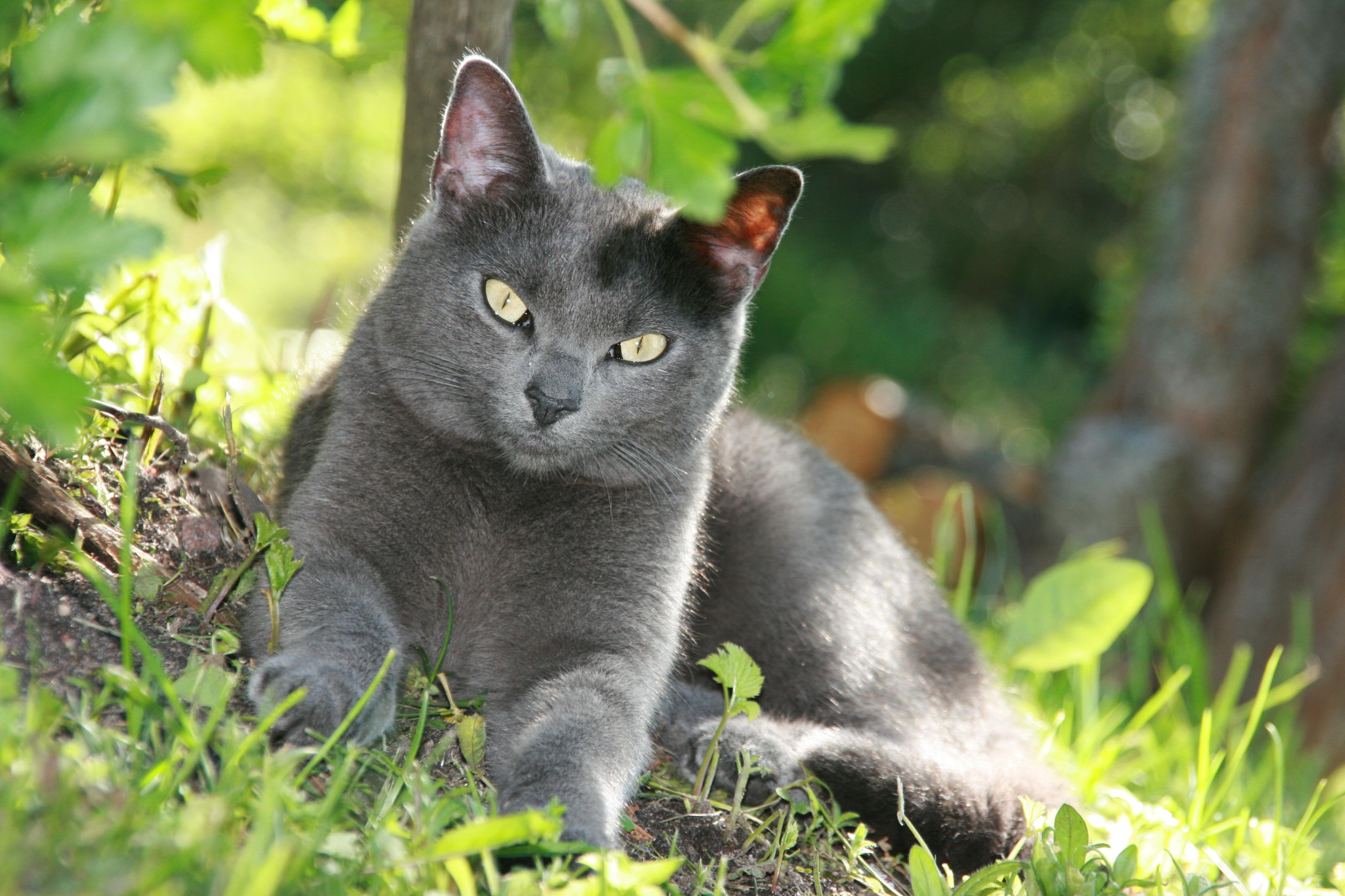 Helpful Herbs for Cats - Pet Blog | ThePetBlogger.com