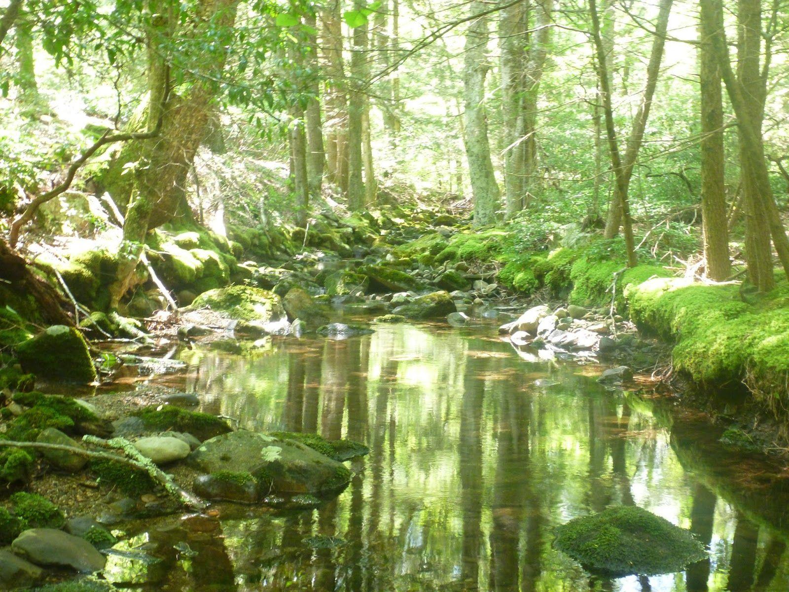 secret pond - Google zoeken | lifestyle | Pinterest | Lifestyle