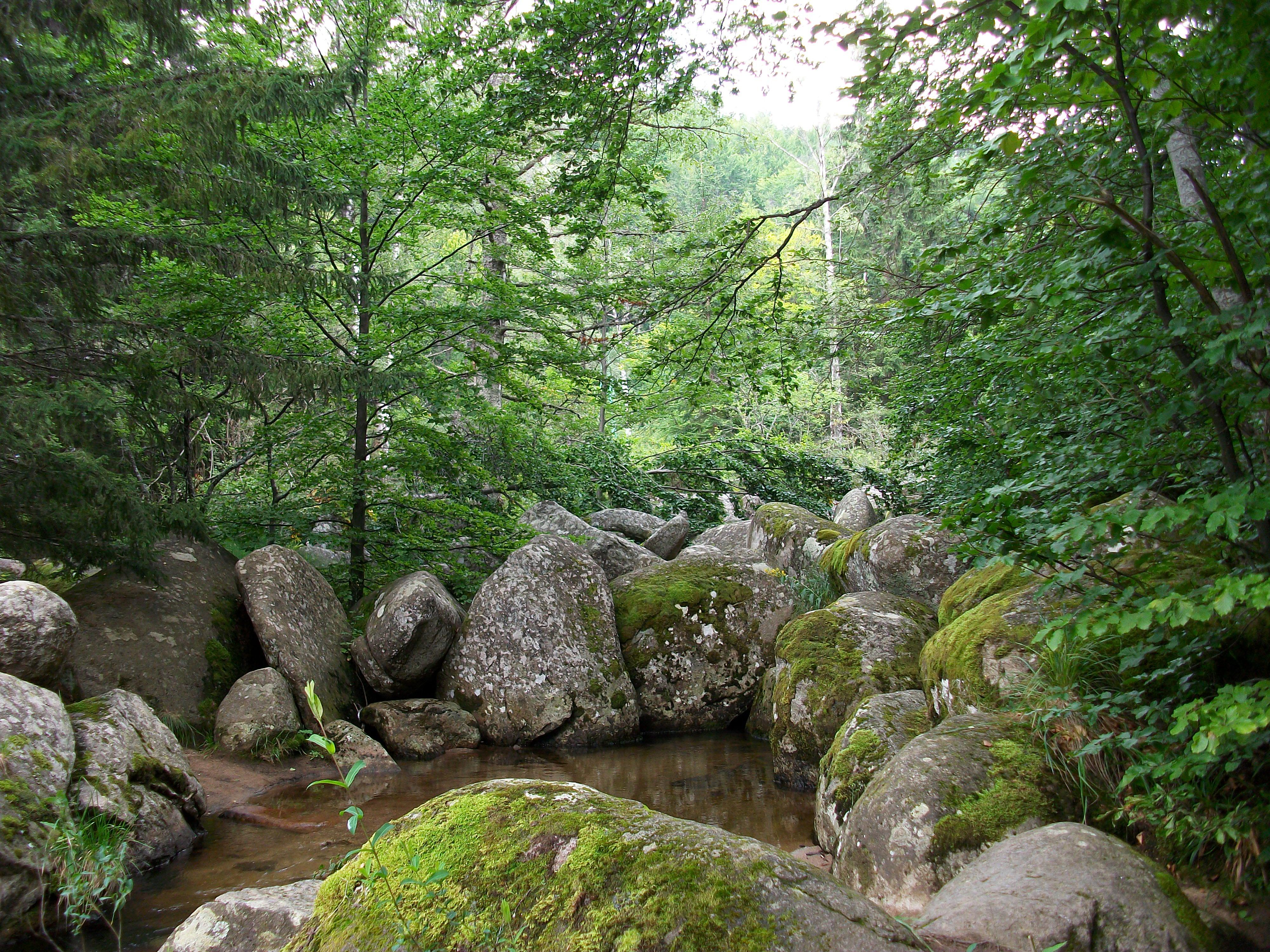 The Hidden Pond, Trees, Vitosha, Rocks, Park, HQ Photo
