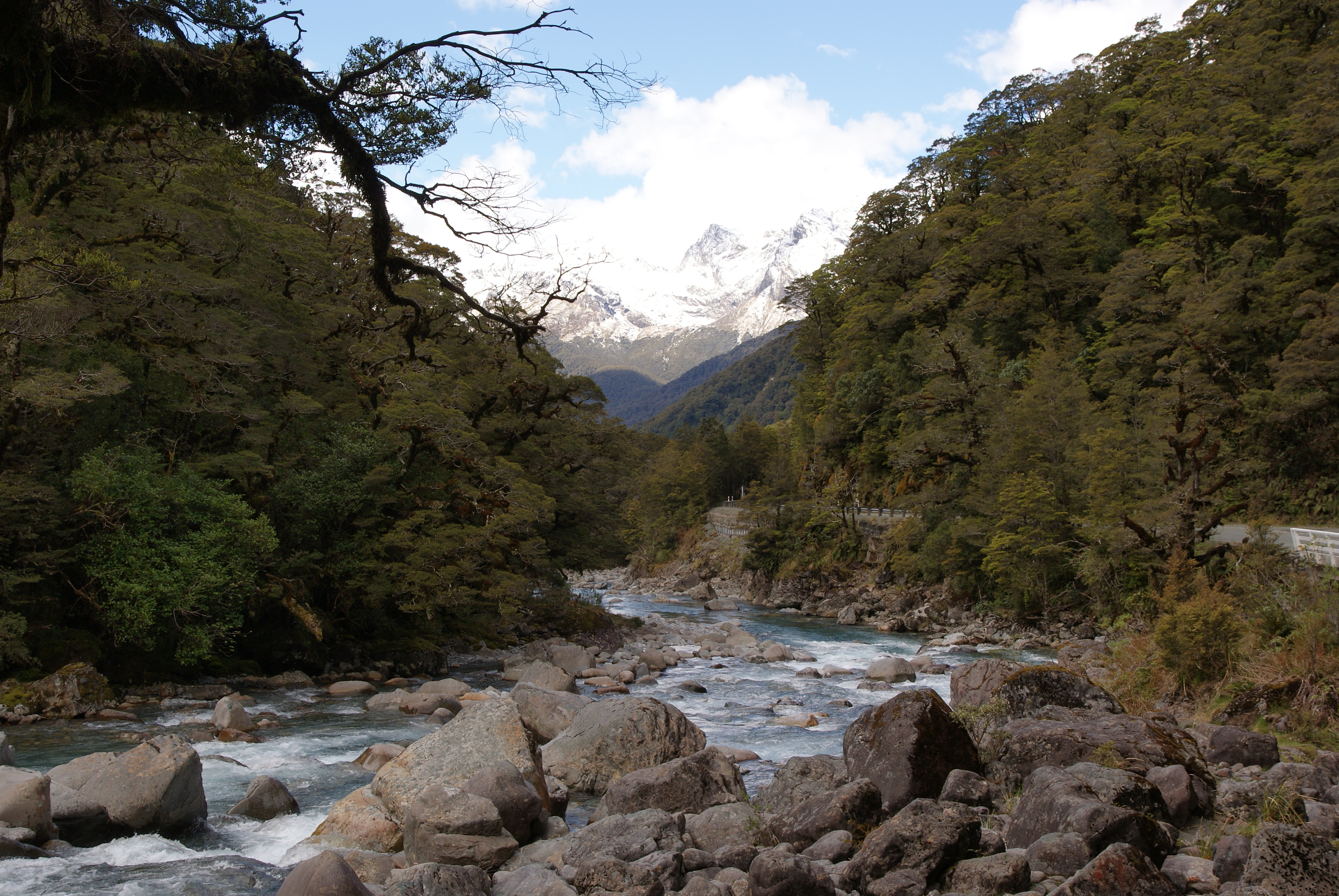 The hollyford river (1) photo