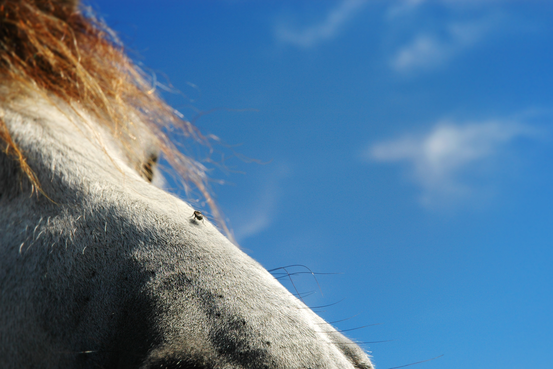 The horse and the fly, Blue, Bspo06, Close-up, Fly, HQ Photo