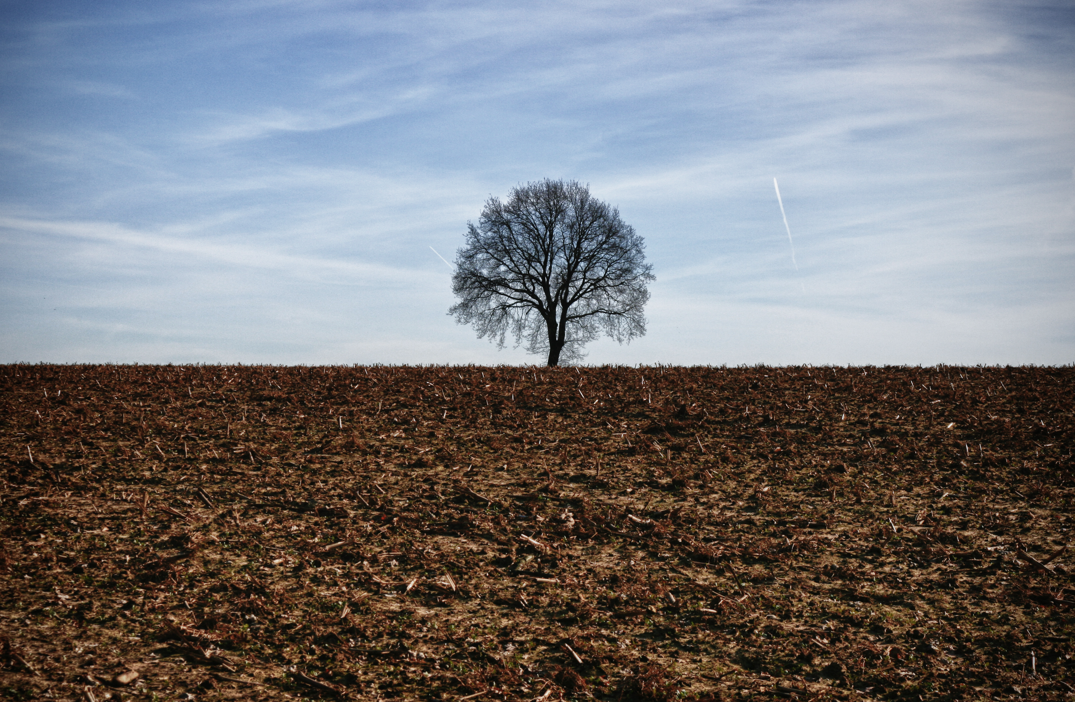 File:Lonely tree (5446264712).jpg - Wikimedia Commons