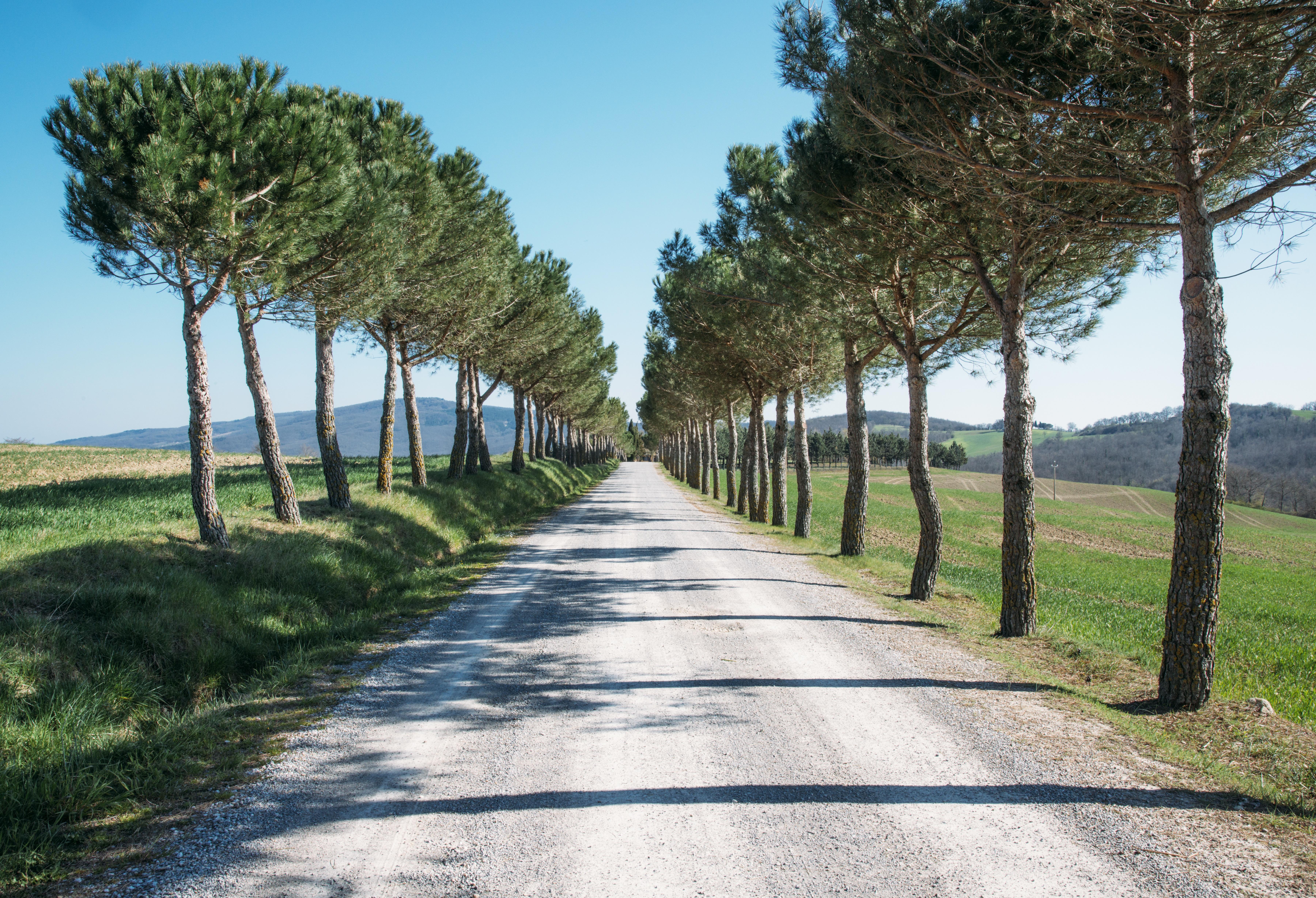 The Route, Green, Landscape, Nature, Path, HQ Photo