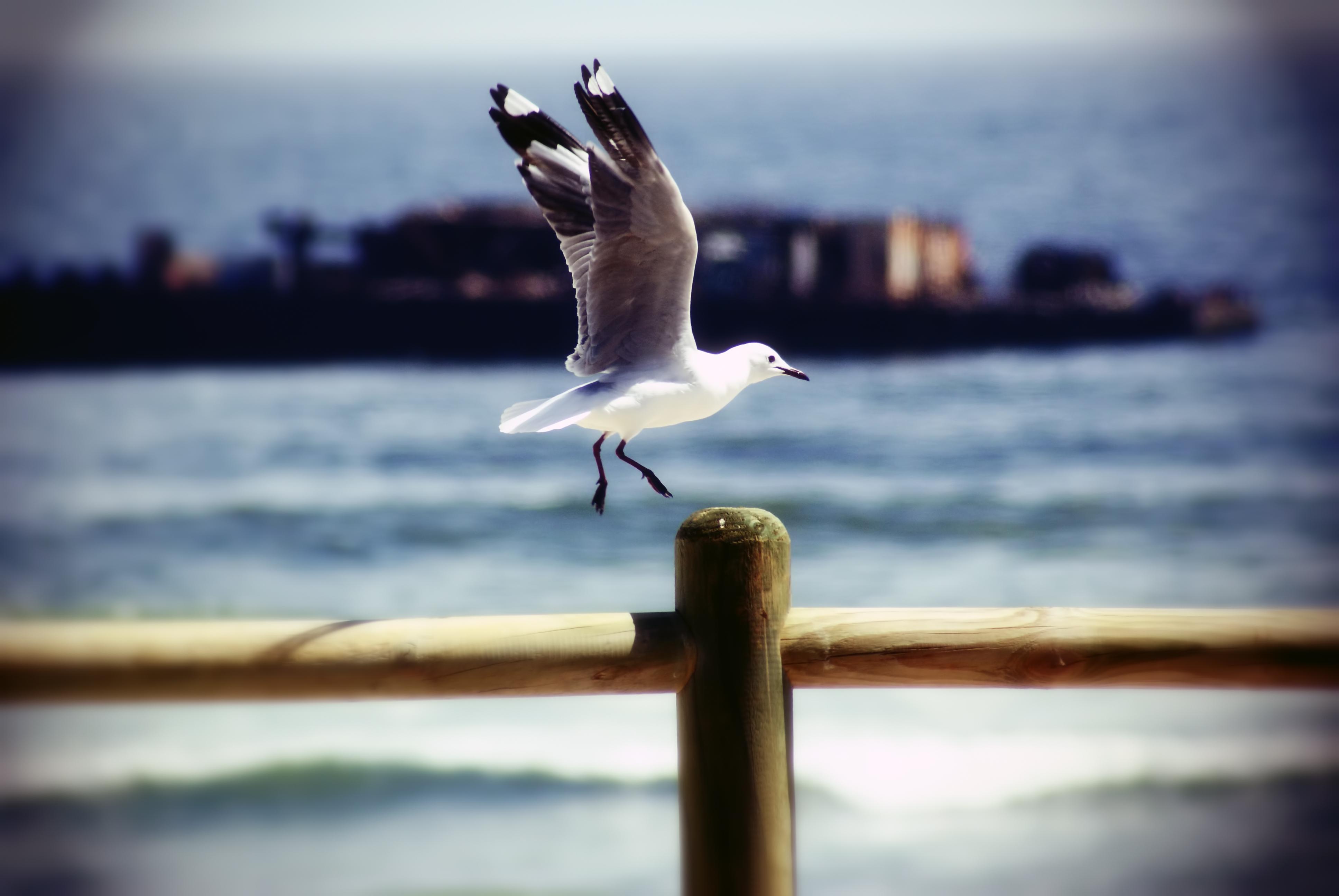 The seagull photo