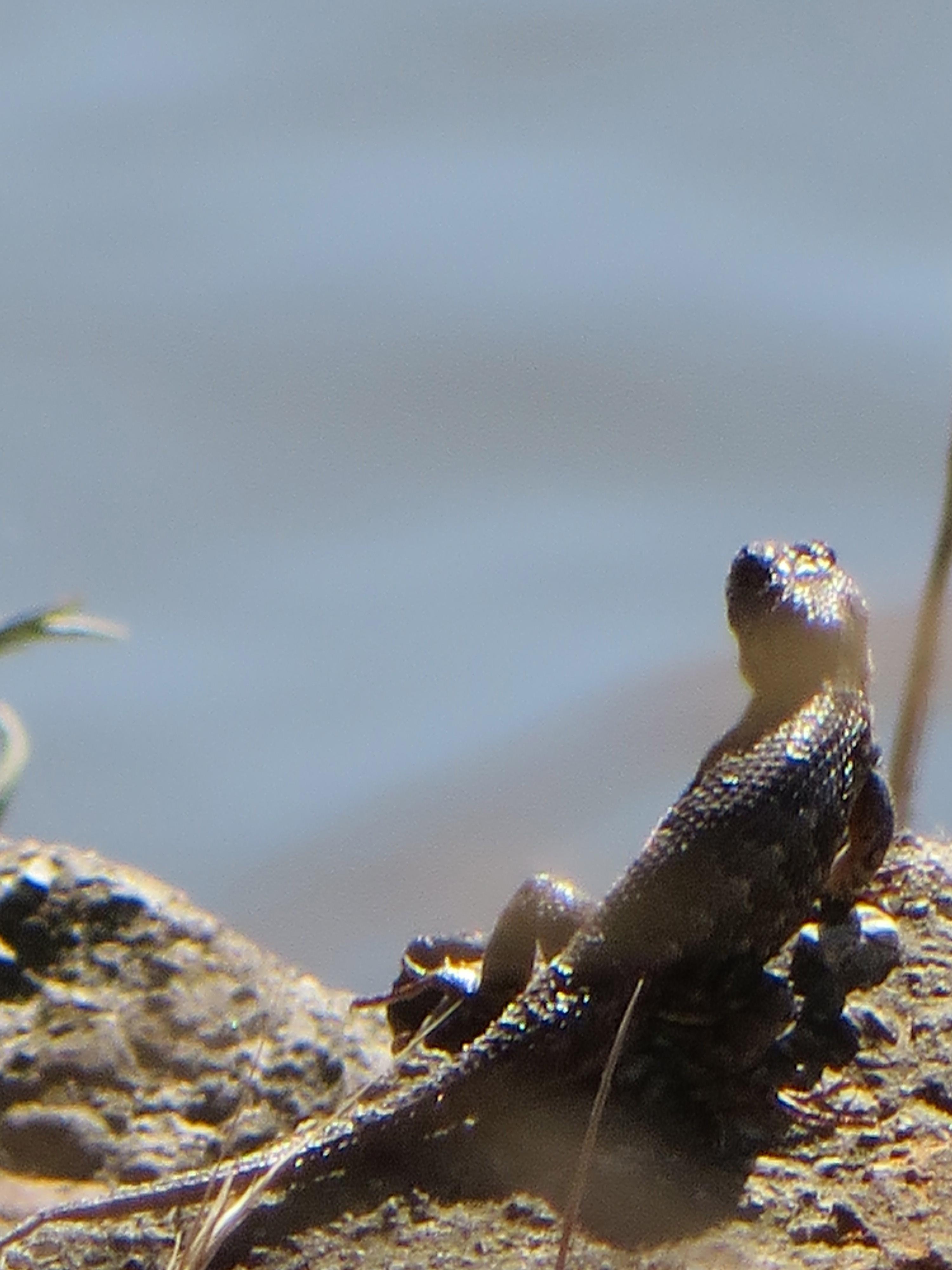 The spy, Animal, Lizard, Reptile, HQ Photo