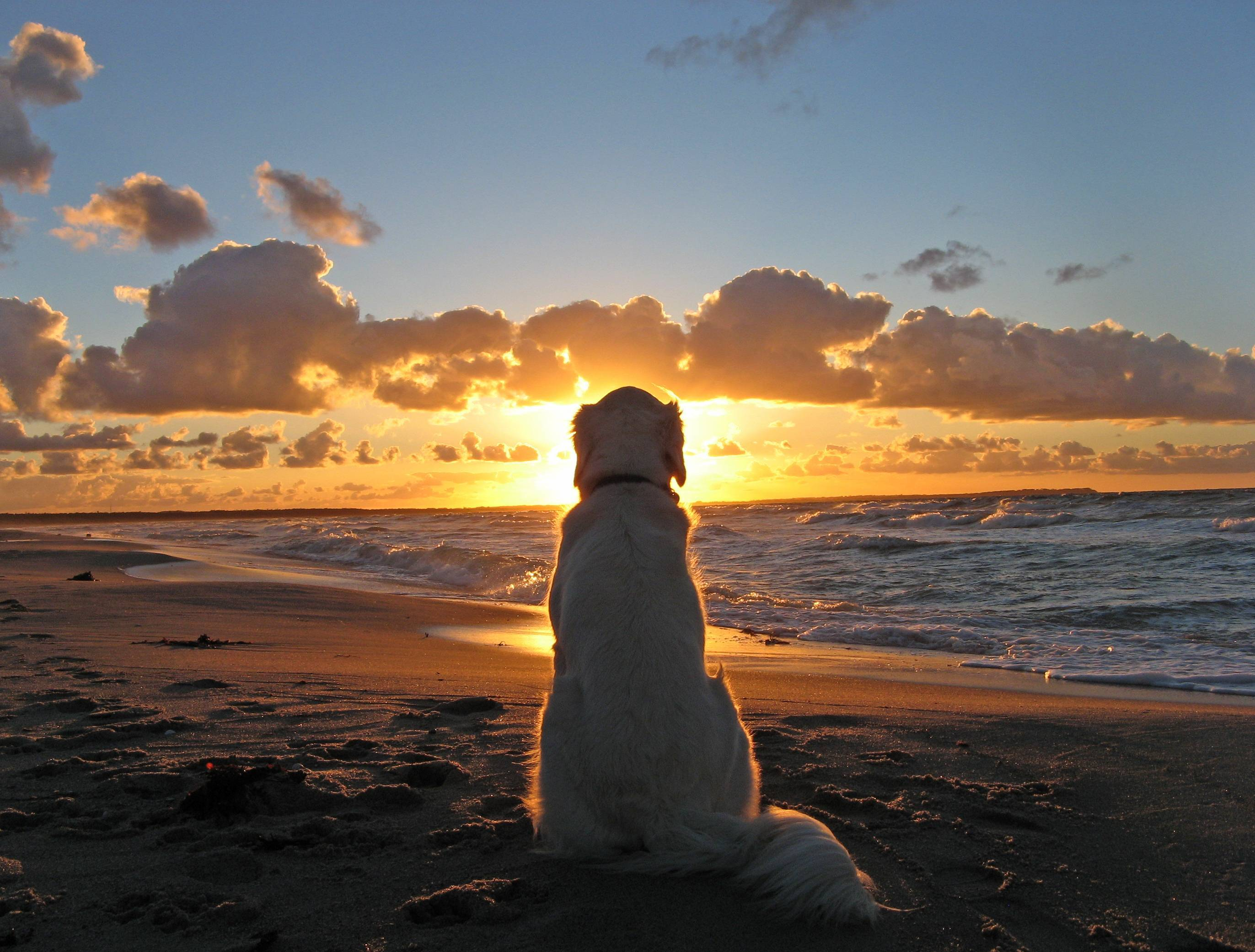 An old dog enjoying the sunset. - Imgur