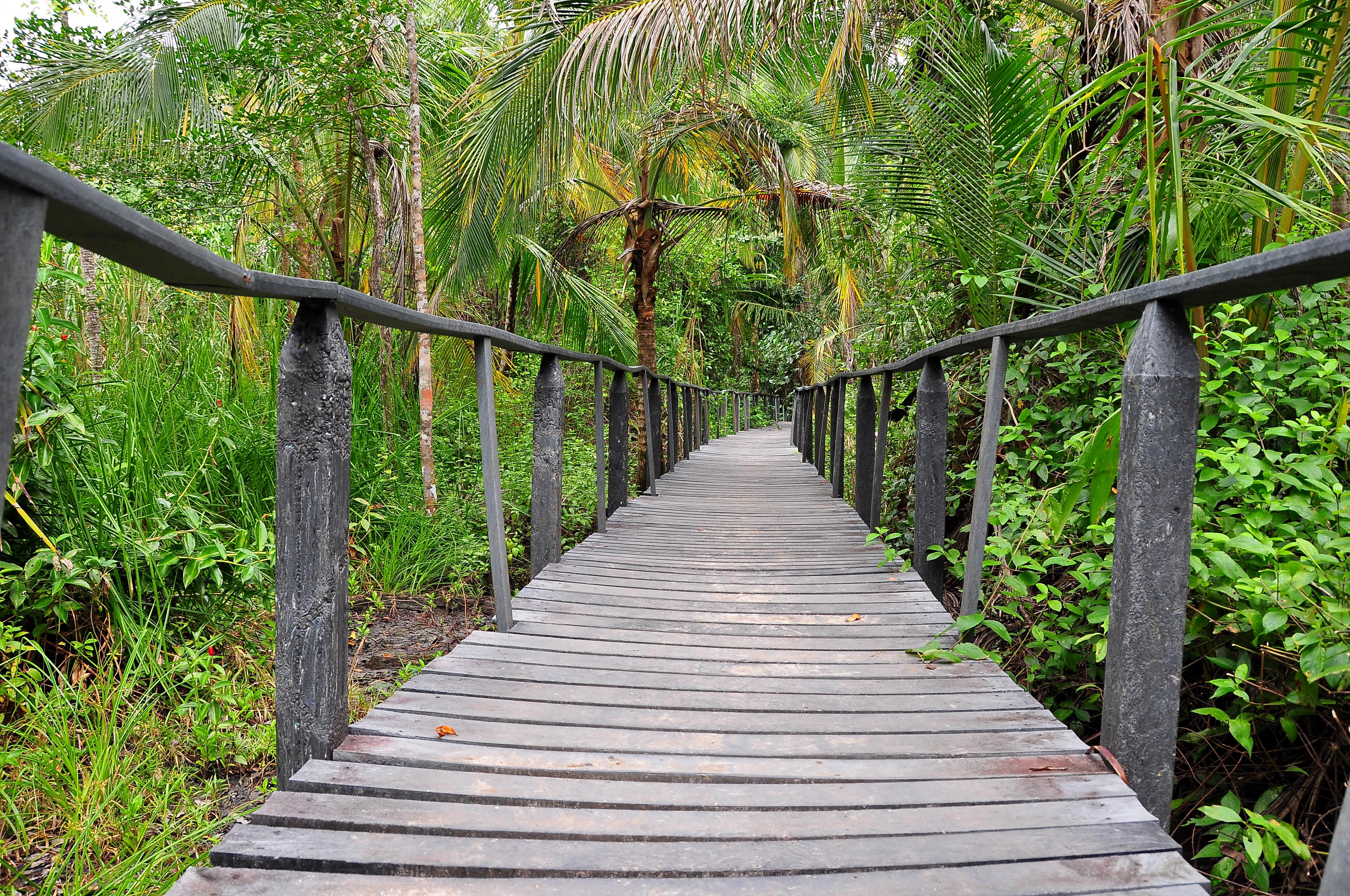 File:A walking bridge in the Cahuita natural reserve.jpg - Wikimedia ...