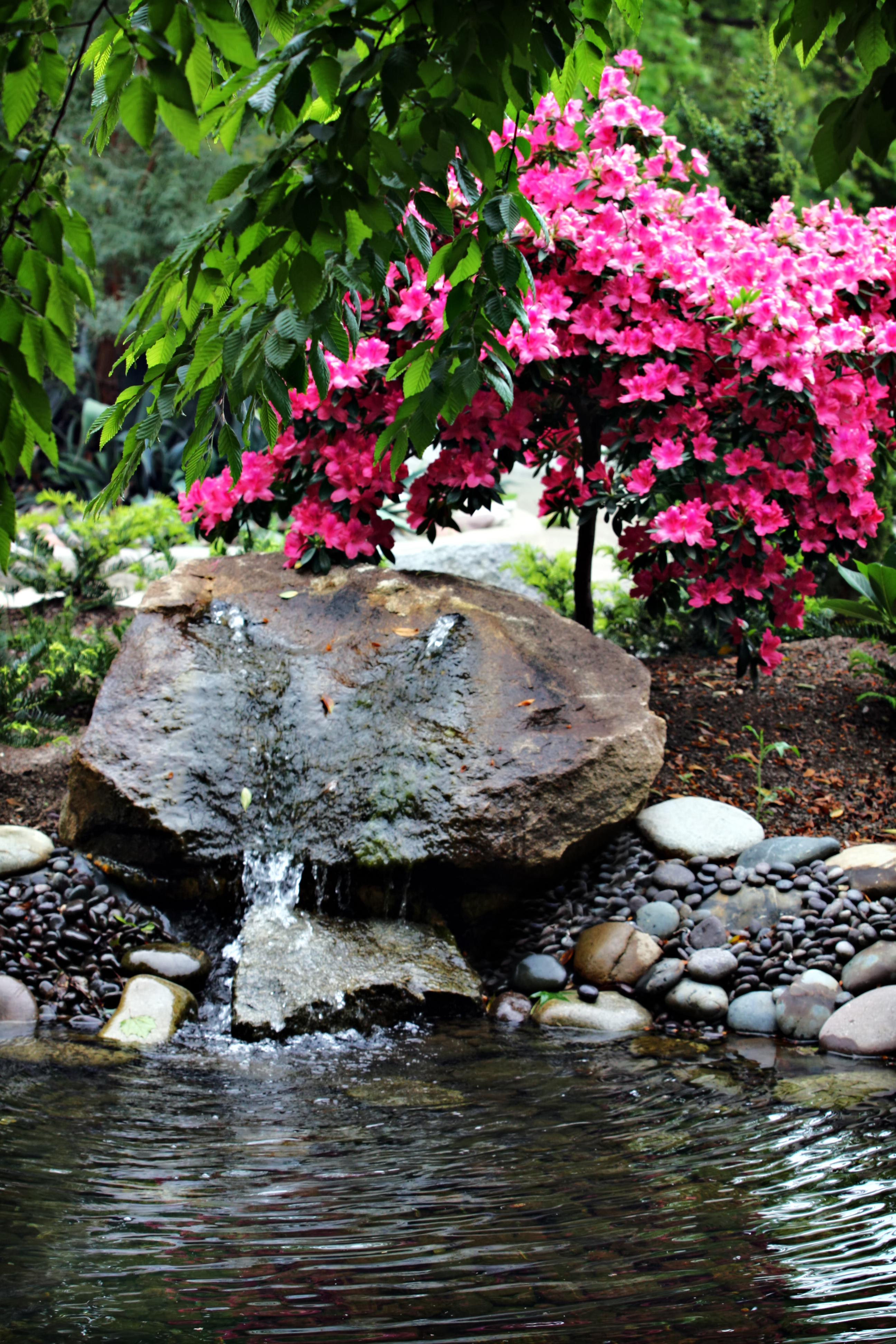 The Water Hole, Flower, Nature, Pink, Plant, HQ Photo