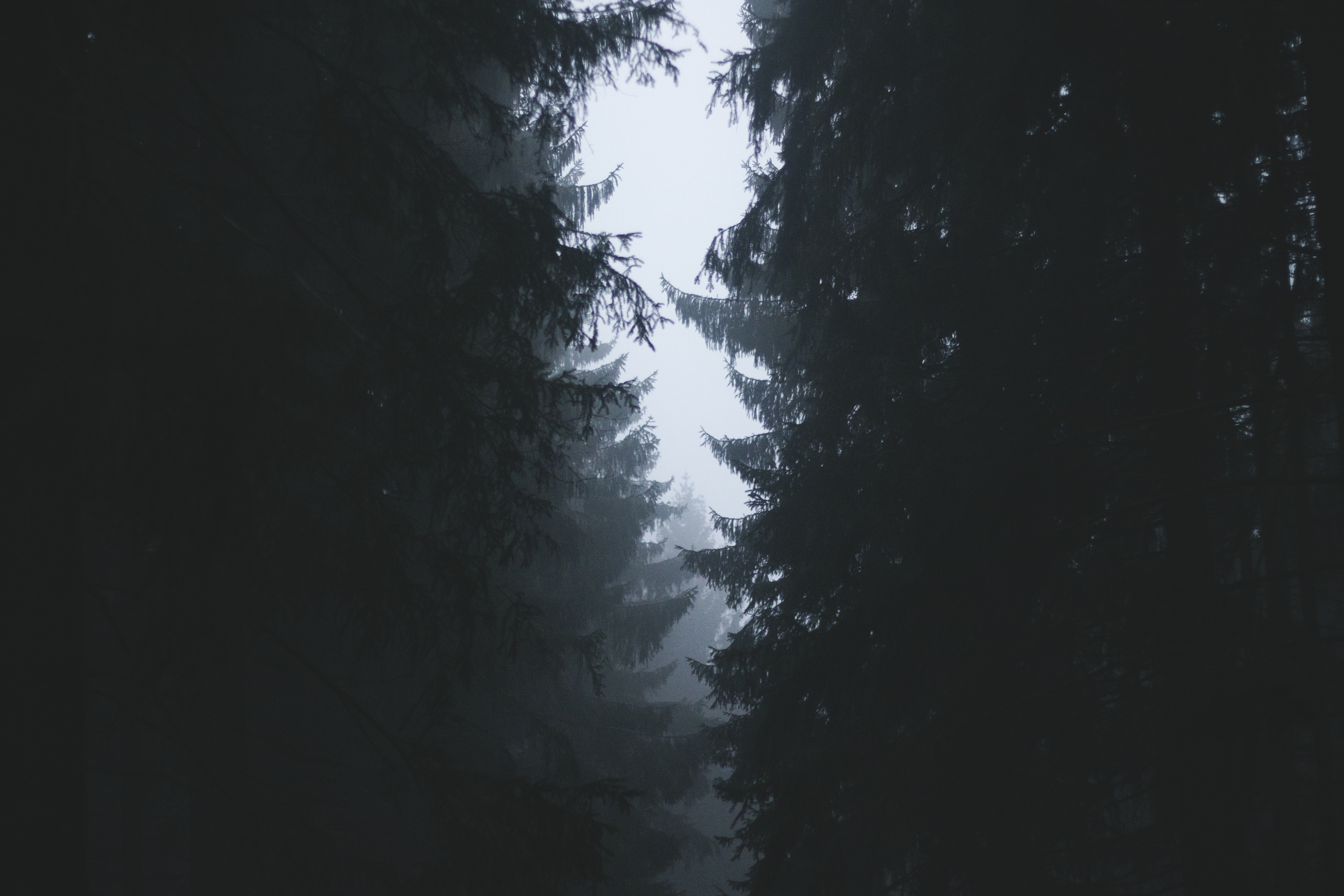 Thick Forest, Thick, Tree, Wood, Woods, HQ Photo