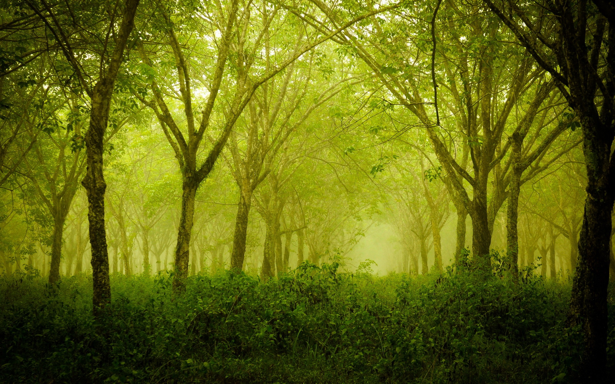 Thick forest photo
