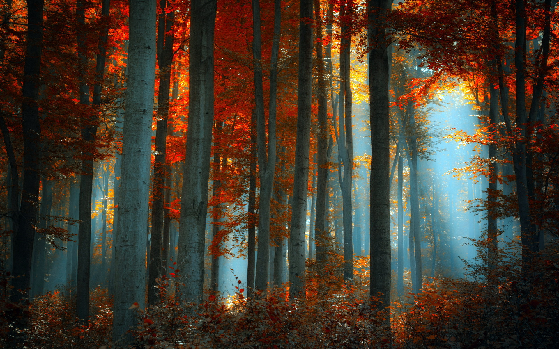 Thick forest #6926457