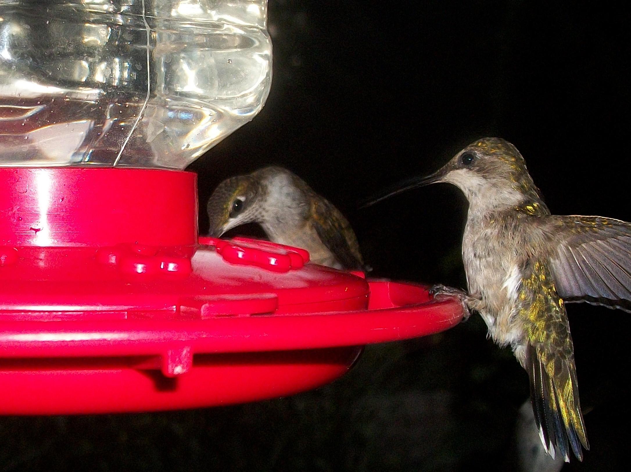 Thirsty birds photo