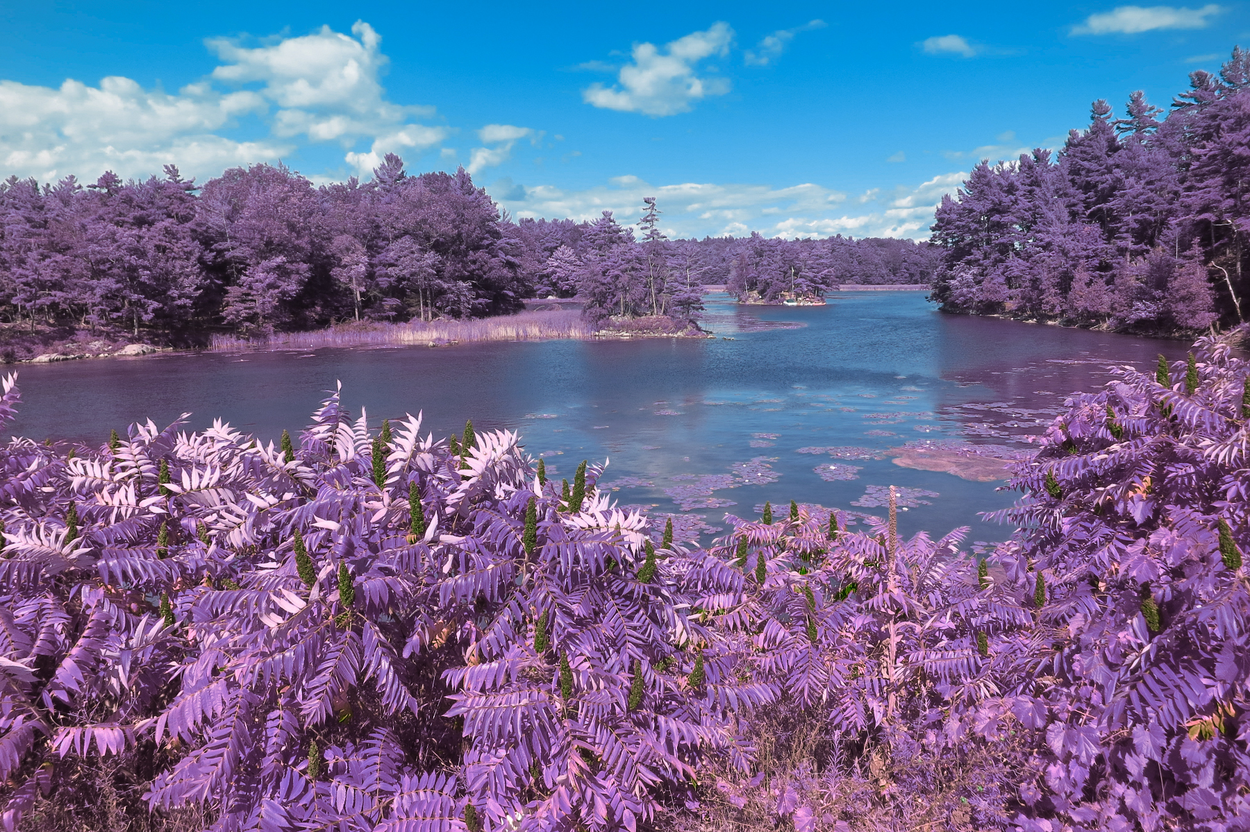 Thousand islands scenery - lavender photo