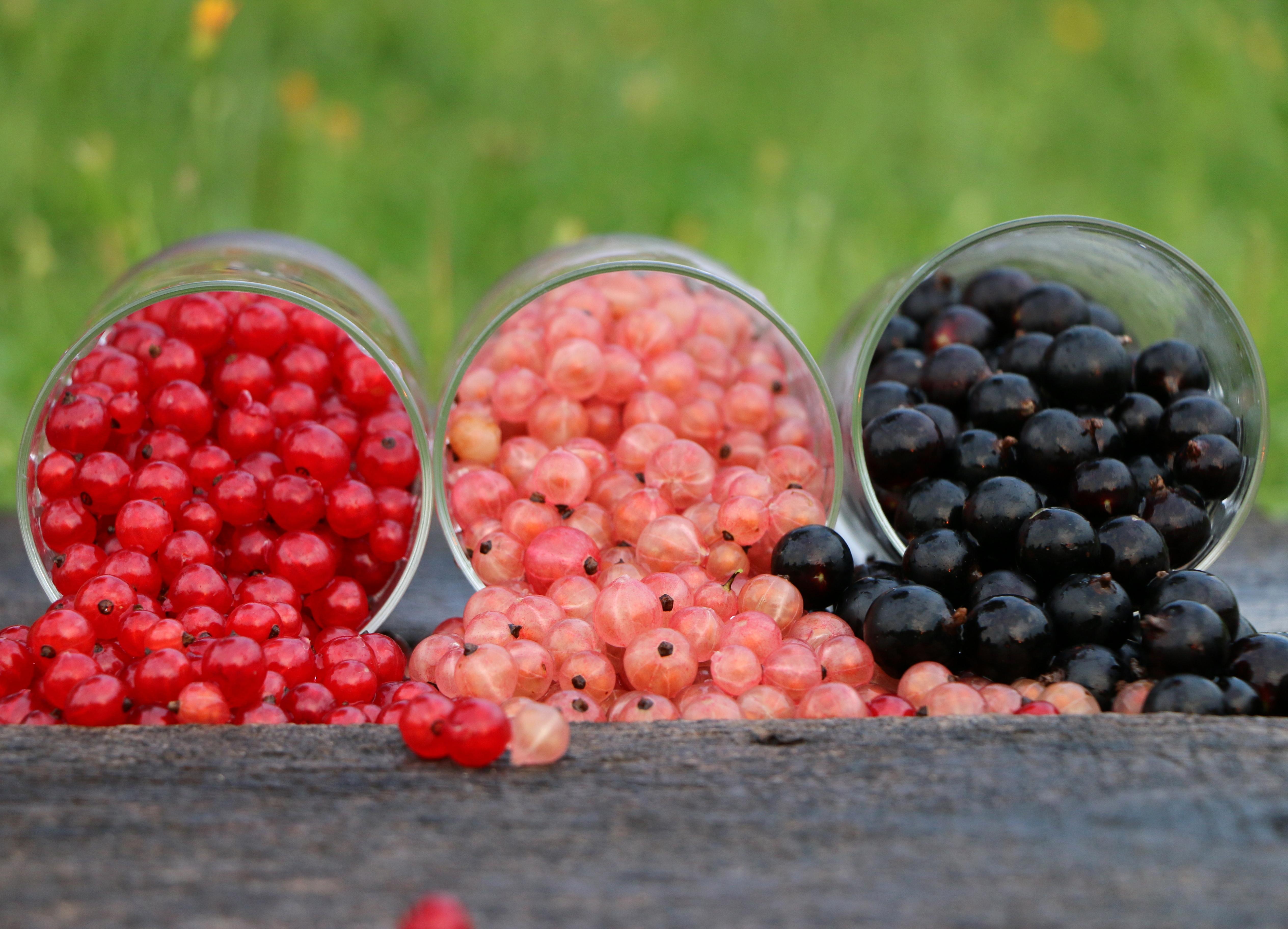 Three berry varieties photo