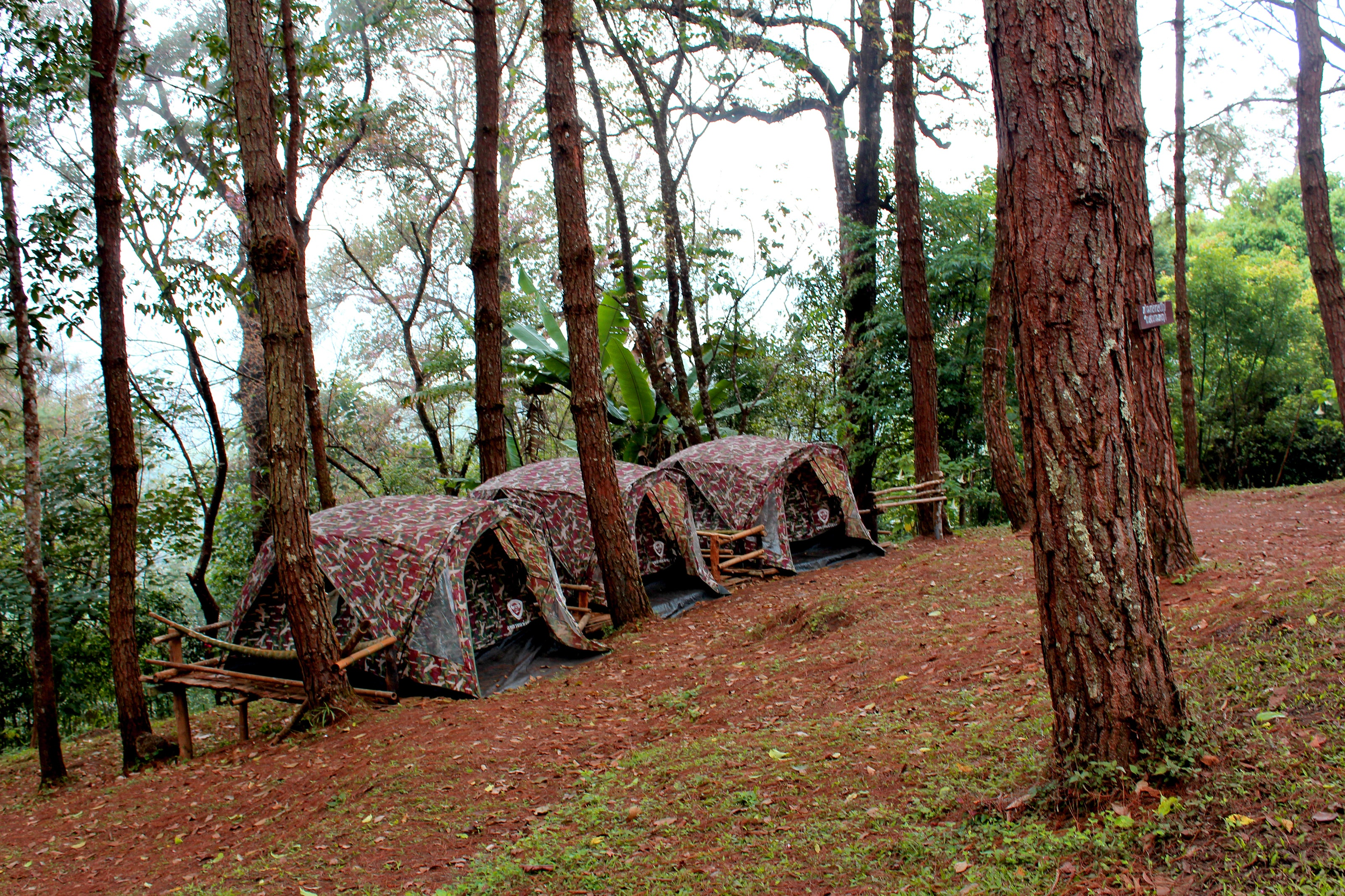 Three brown tents beside green leaf trees photo
