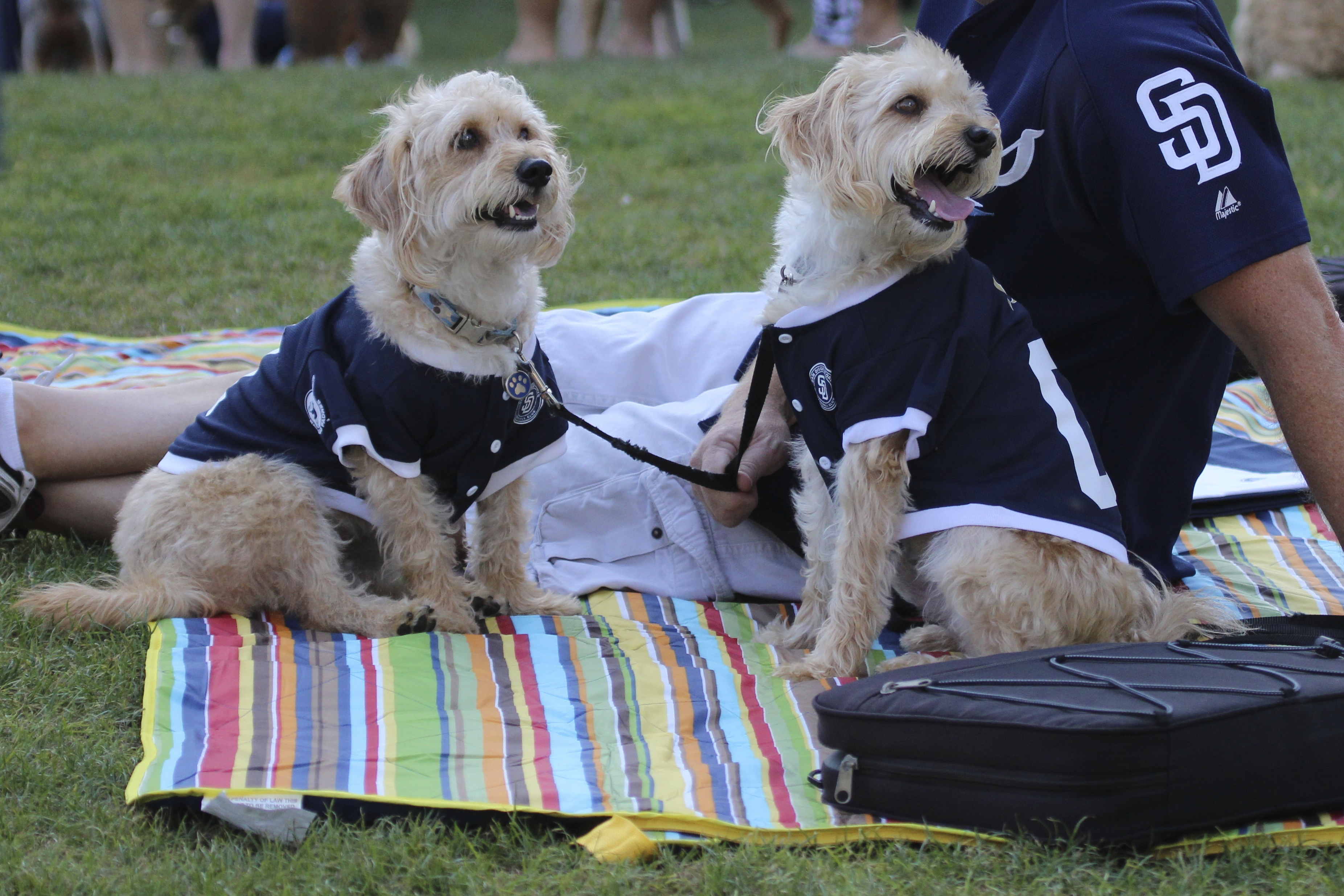 San Diego Happy Dogs | Best Dog Days of Summer at Petco Park
