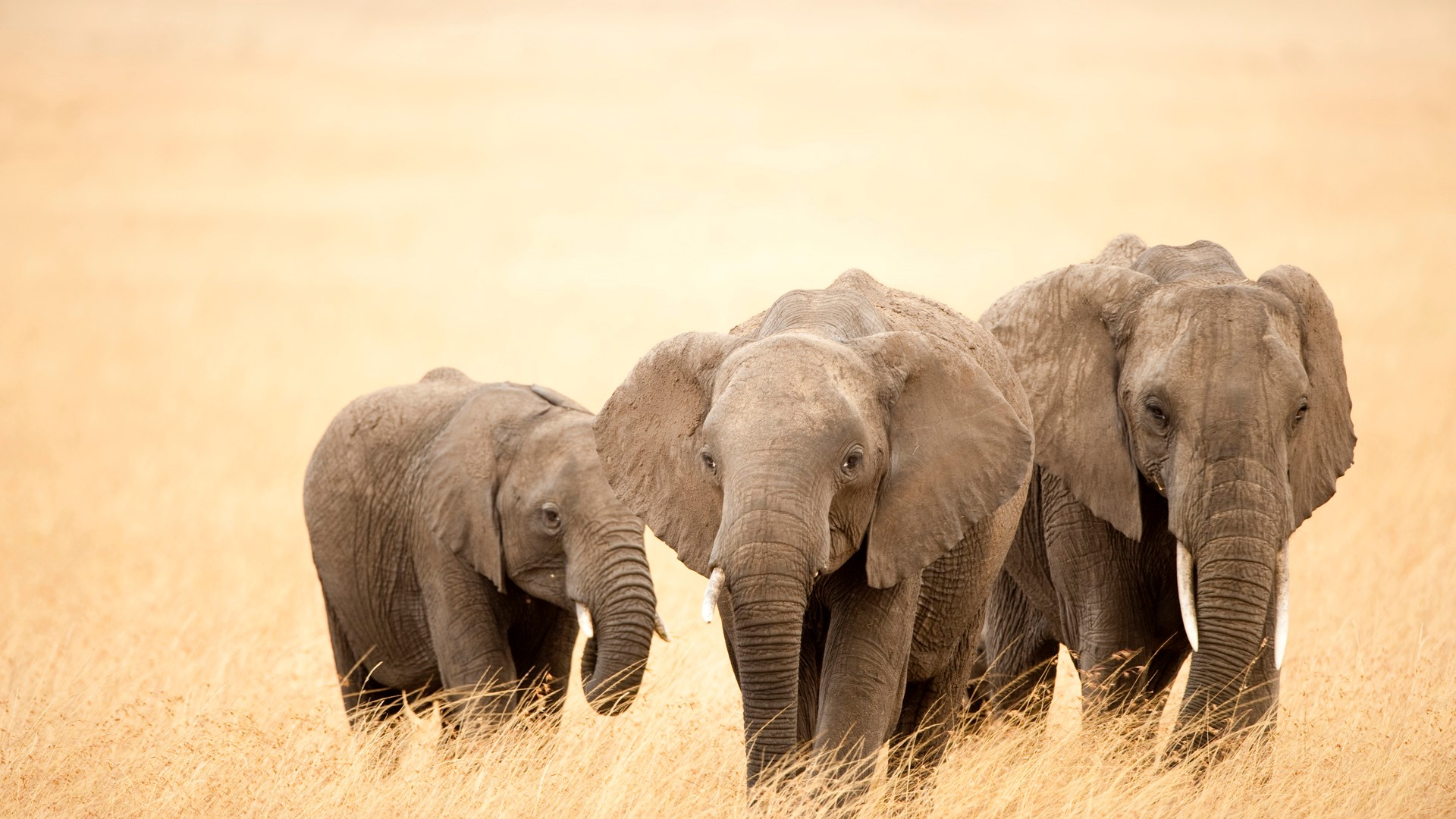Three elephants photo