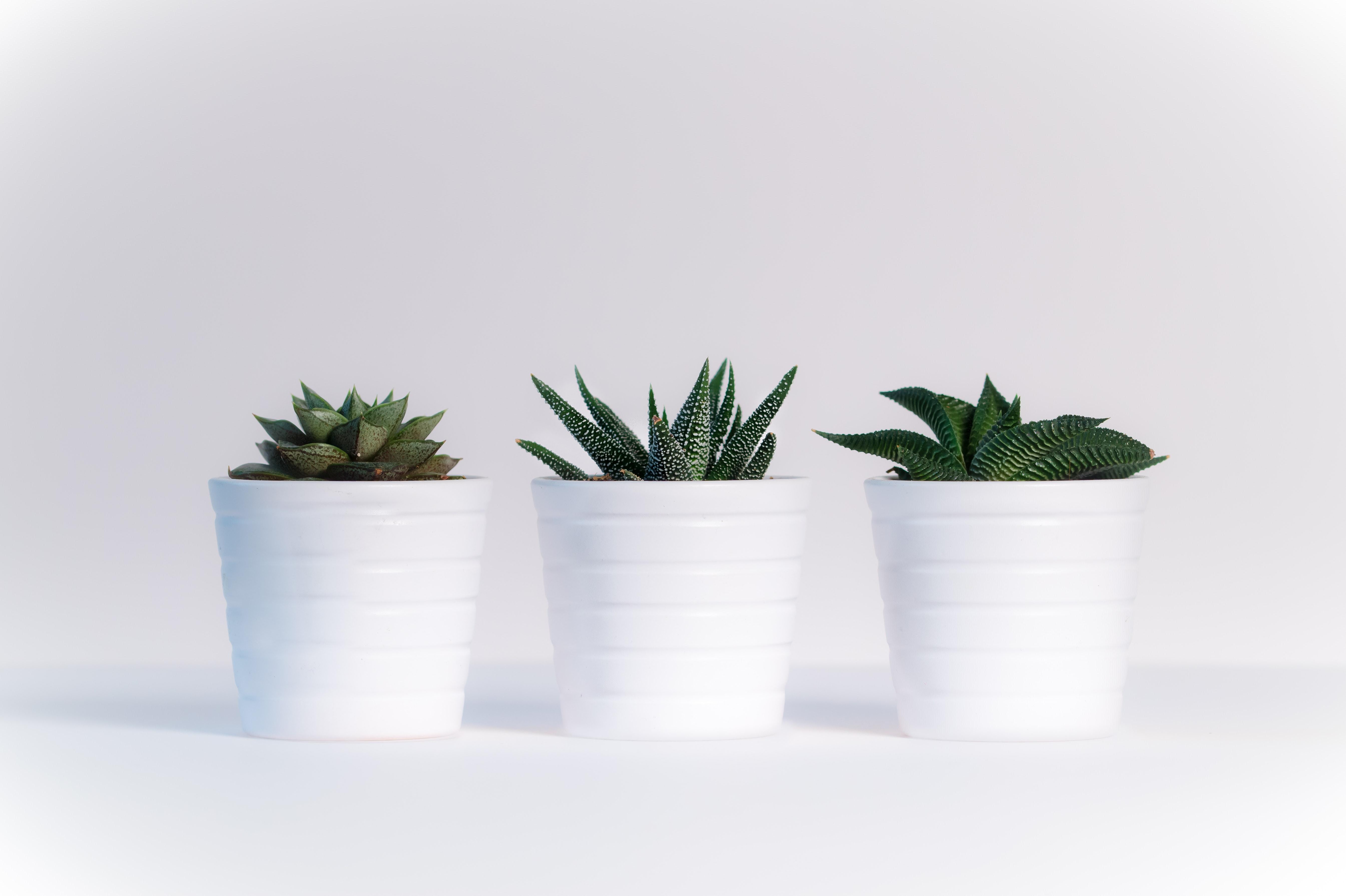 Three Green Assorted Plants in White Ceramic Pots, Plants, White background, White, Wallpaper, HQ Photo