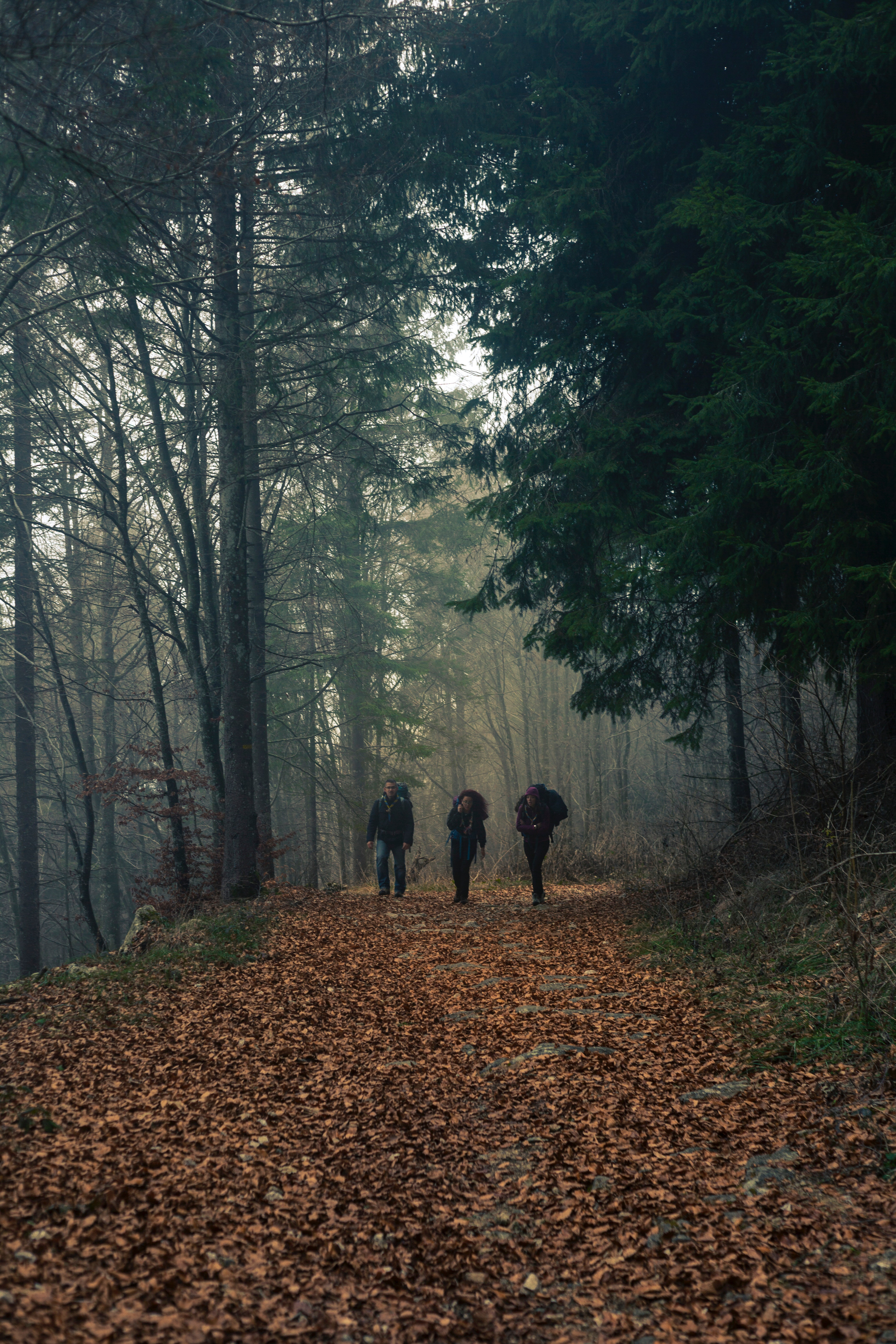 Three person walks on dried leaf covered pathway surrounded by trees photo