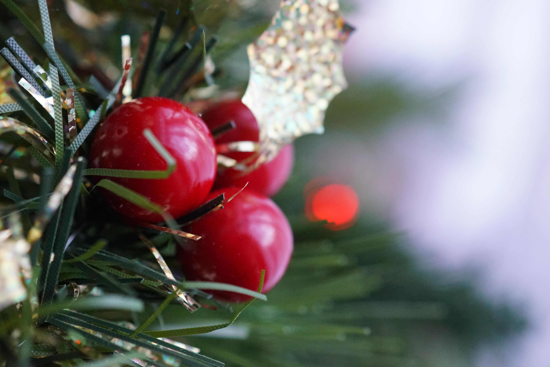 Three round red fruits photo