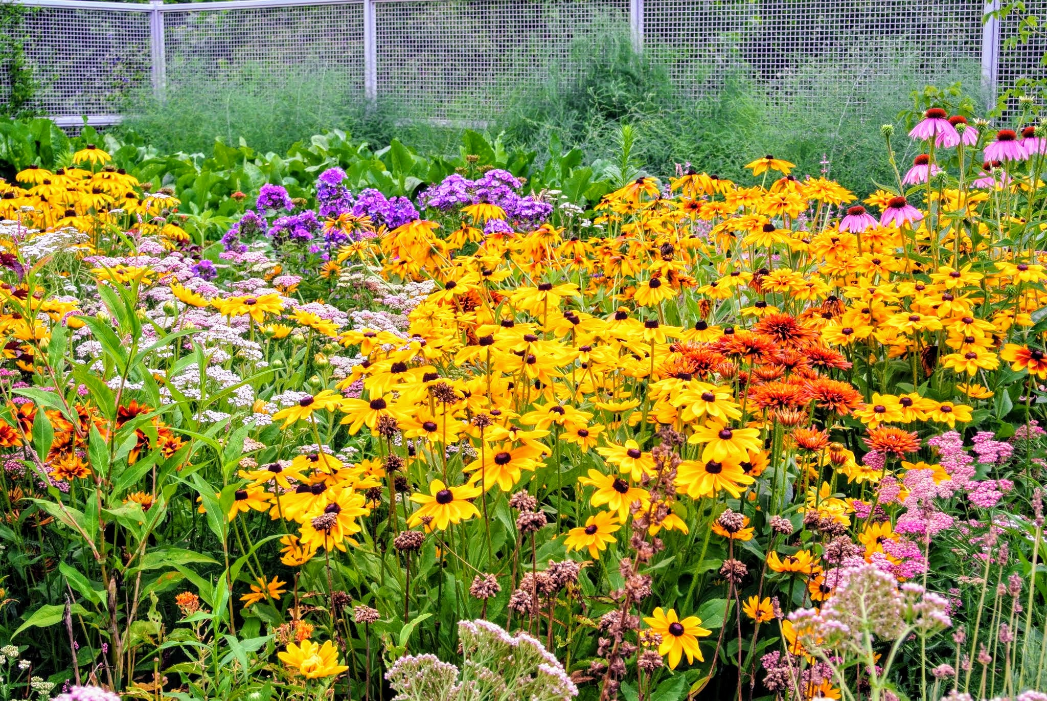 July Blooms in My Cutting Garden - The Martha Stewart Blog