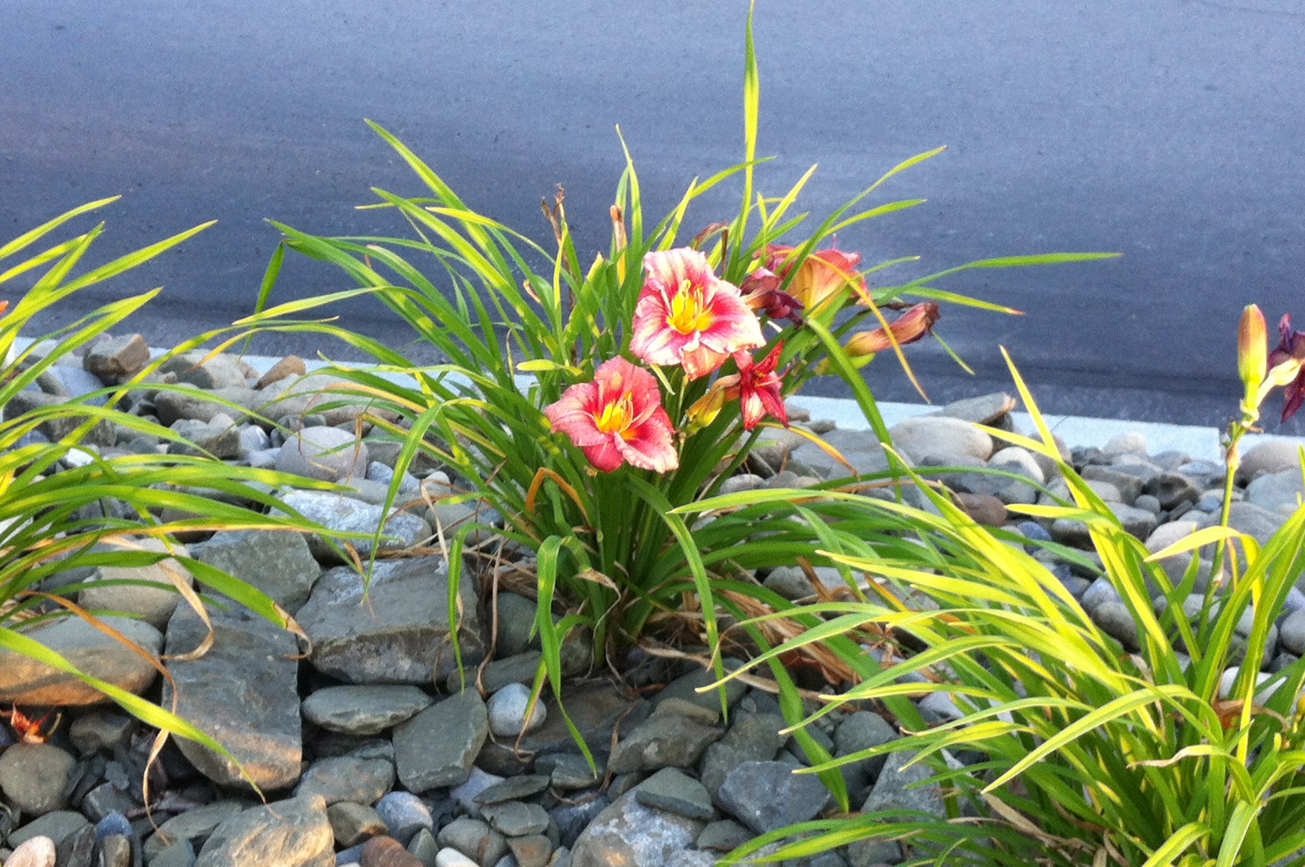 In parking lot..thriving flowers | Flowers - I don't want delivered ...