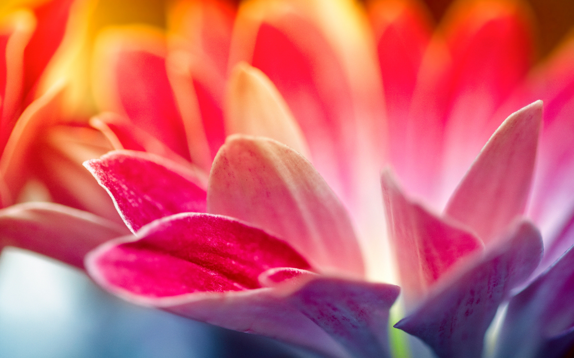 amazing flower wallpapers Download