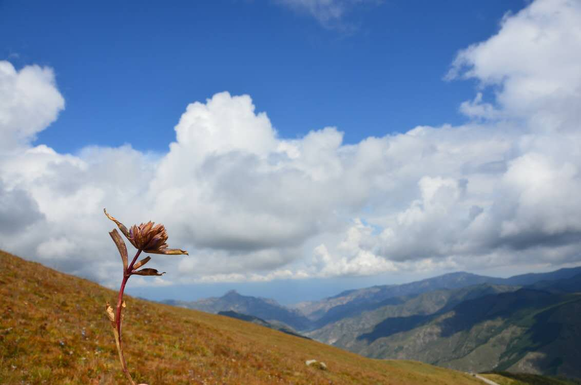 Thriving Flower, Nature, Sky, Mountains, Landscape, HQ Photo