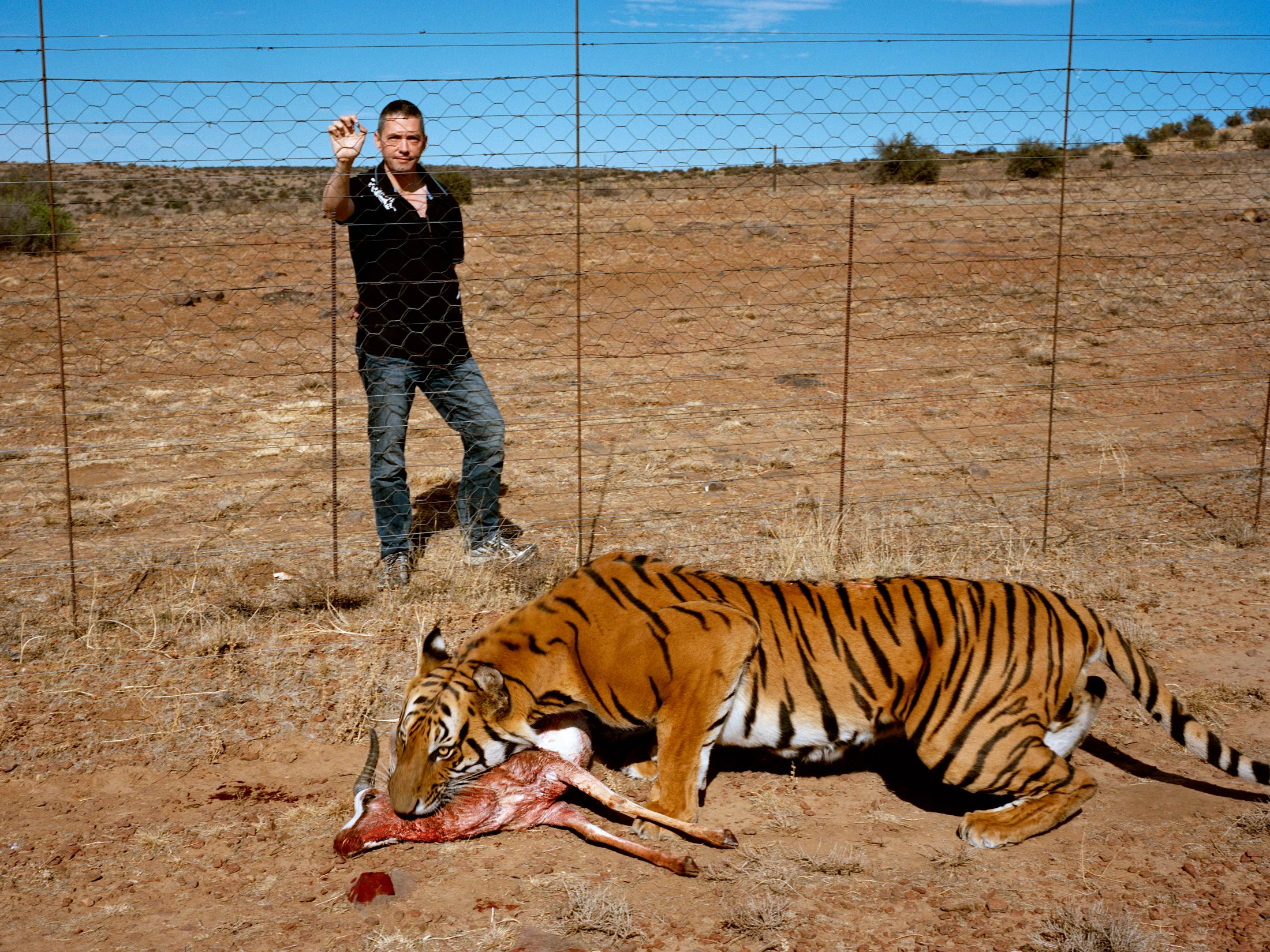 The South China Tiger Is Functionally Extinct. Stuart Bray Has 19 of ...