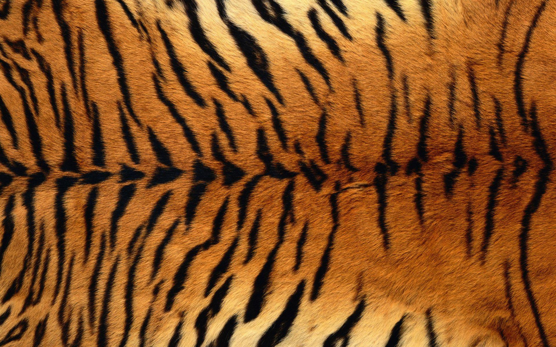 Tiger skin print photo