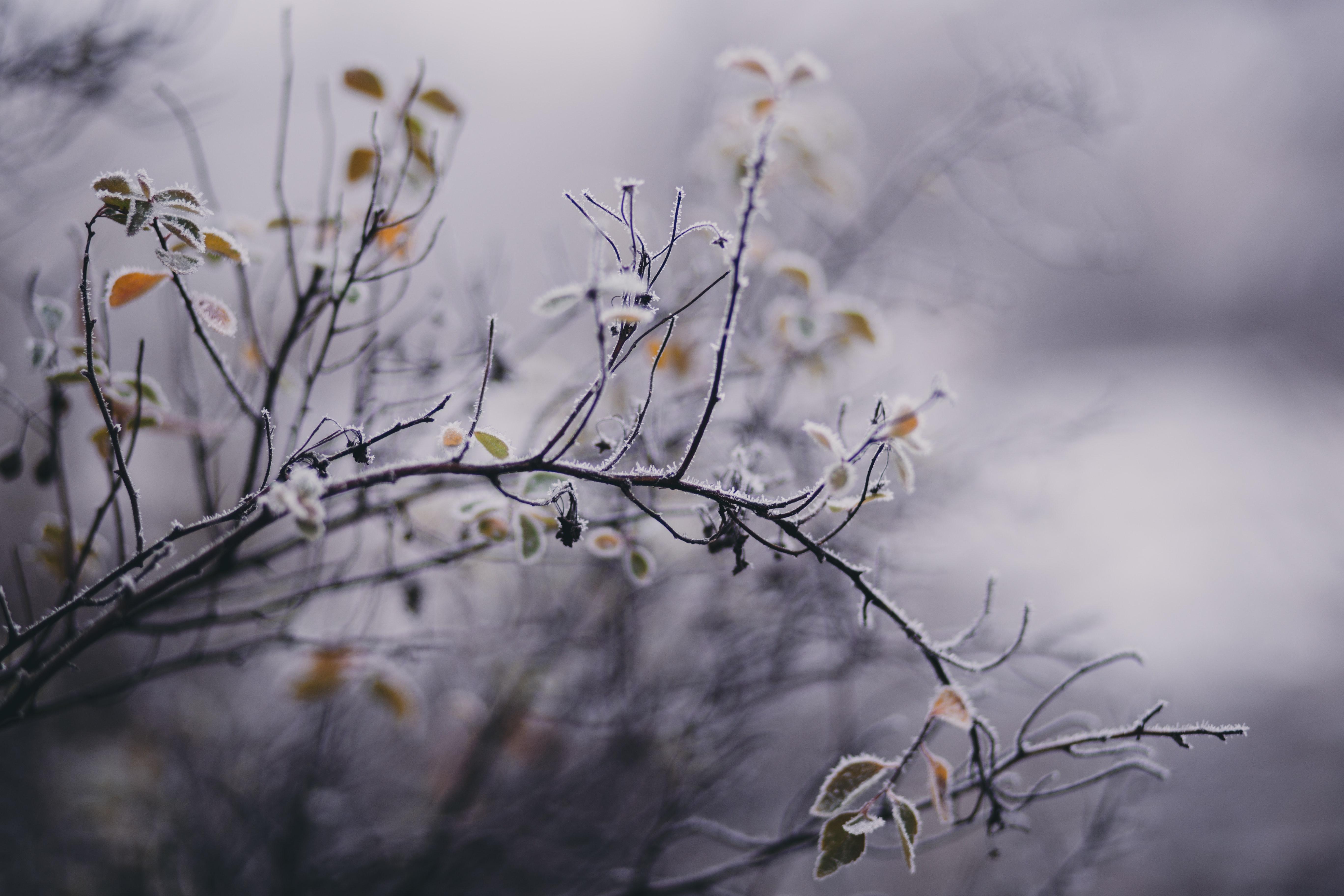 Tilt Shift Focus Photography of White Petaled Flower, Blurred background, Landscape, Weather, Sunlight, HQ Photo