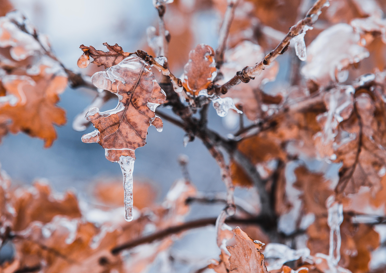 Tilt Shift Lens of Brown Leaves, Blurred background, Landscape, Weather, Snowy, HQ Photo