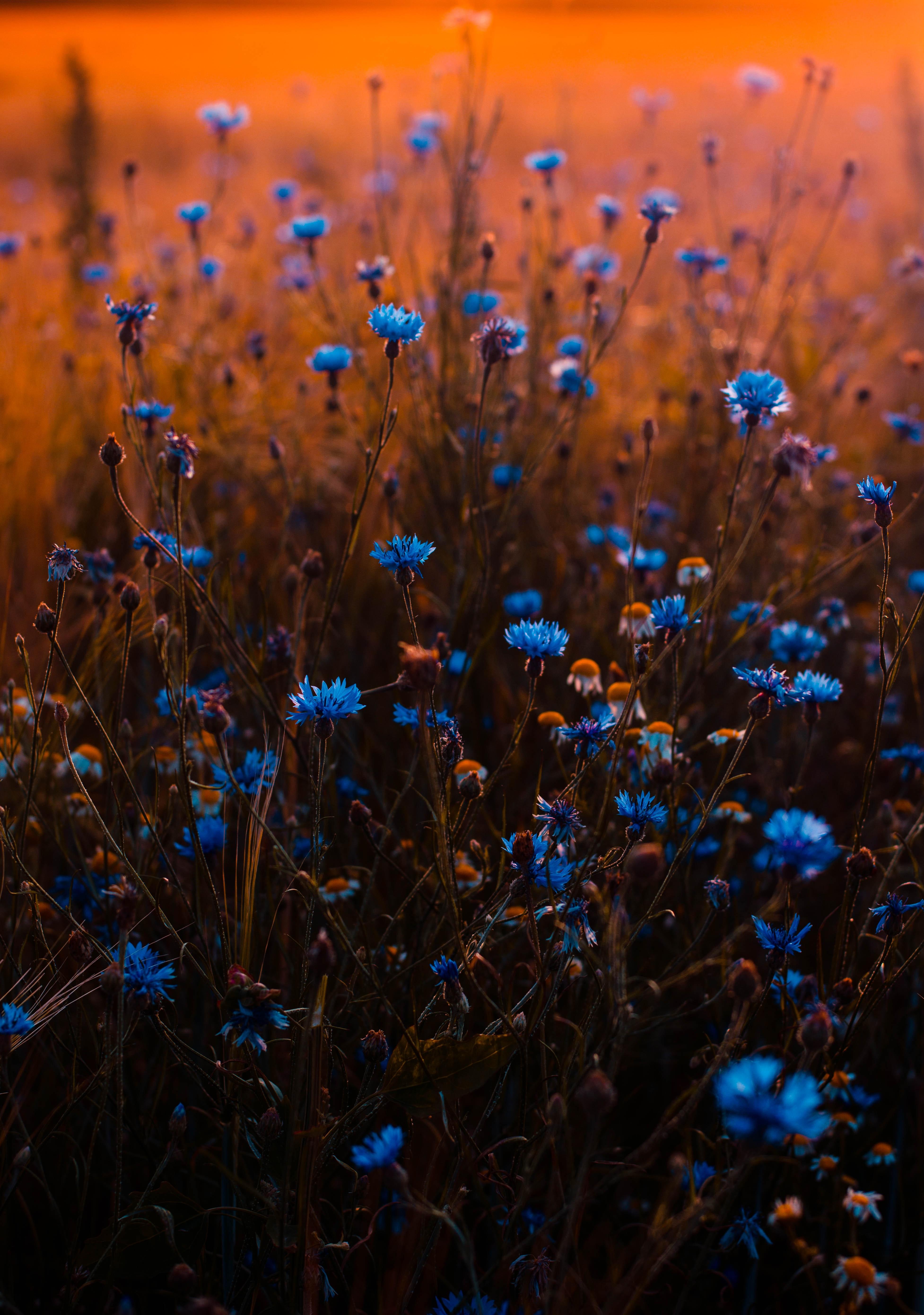 Tilt shift lens photo of blue flowers