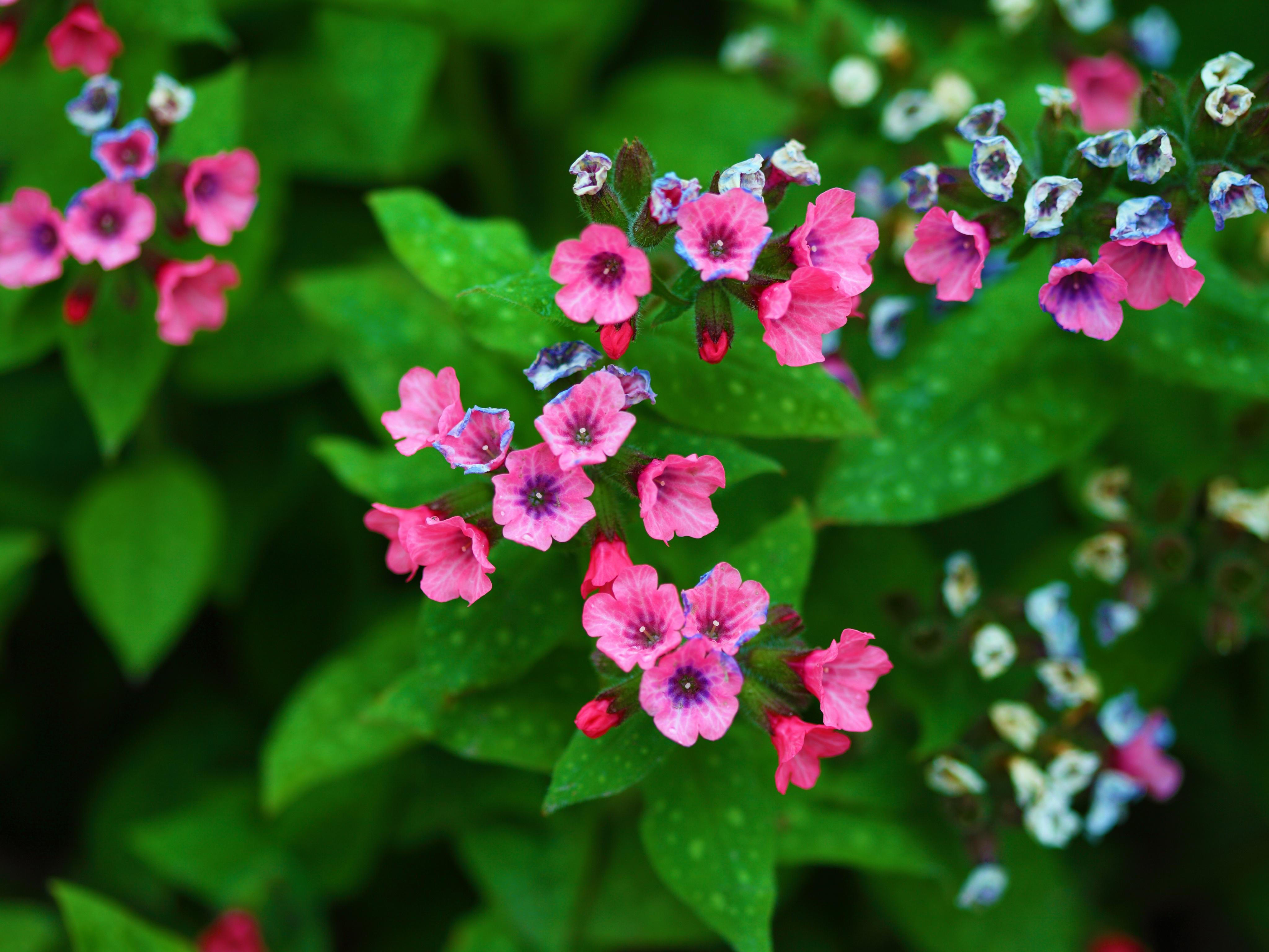 Free photo tiny pink flowers tiny tree texture free download tiny pink flowers mightylinksfo