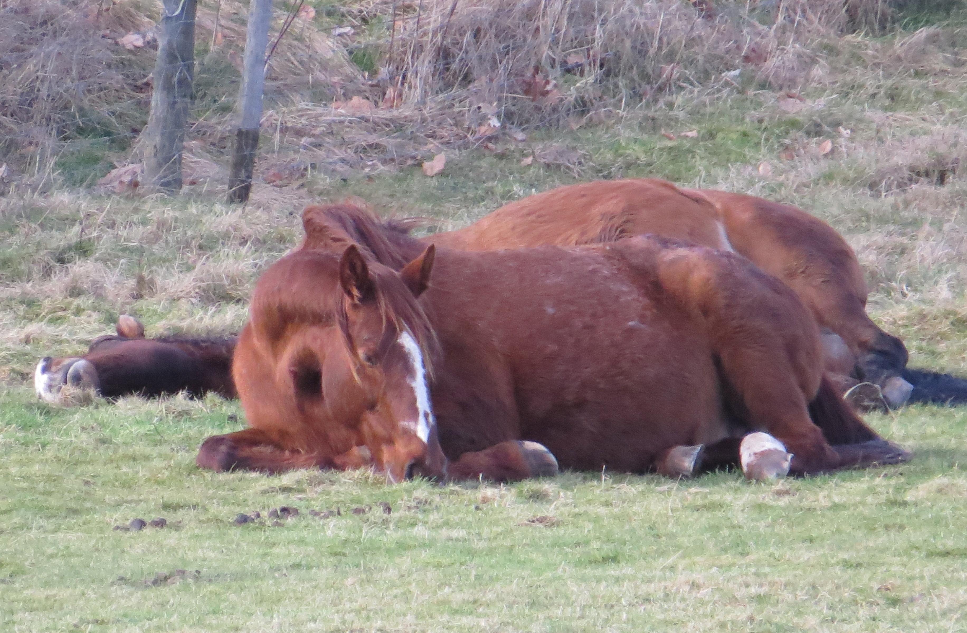 Tired horses photo