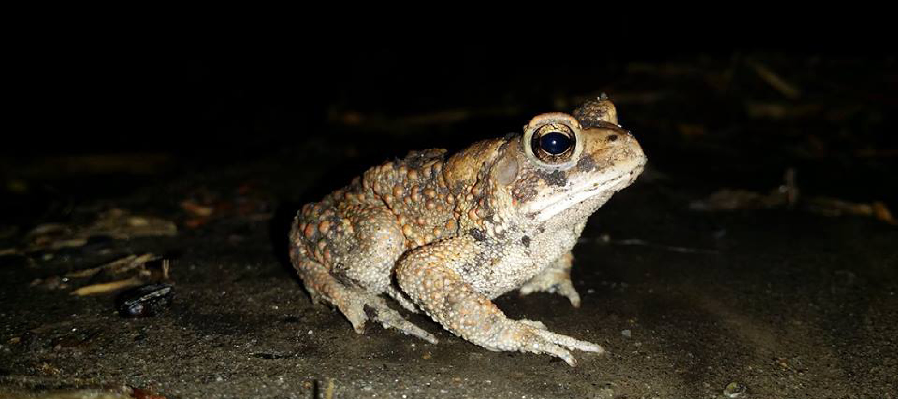 Toad Night - Schuylkill Center for Environmental Education