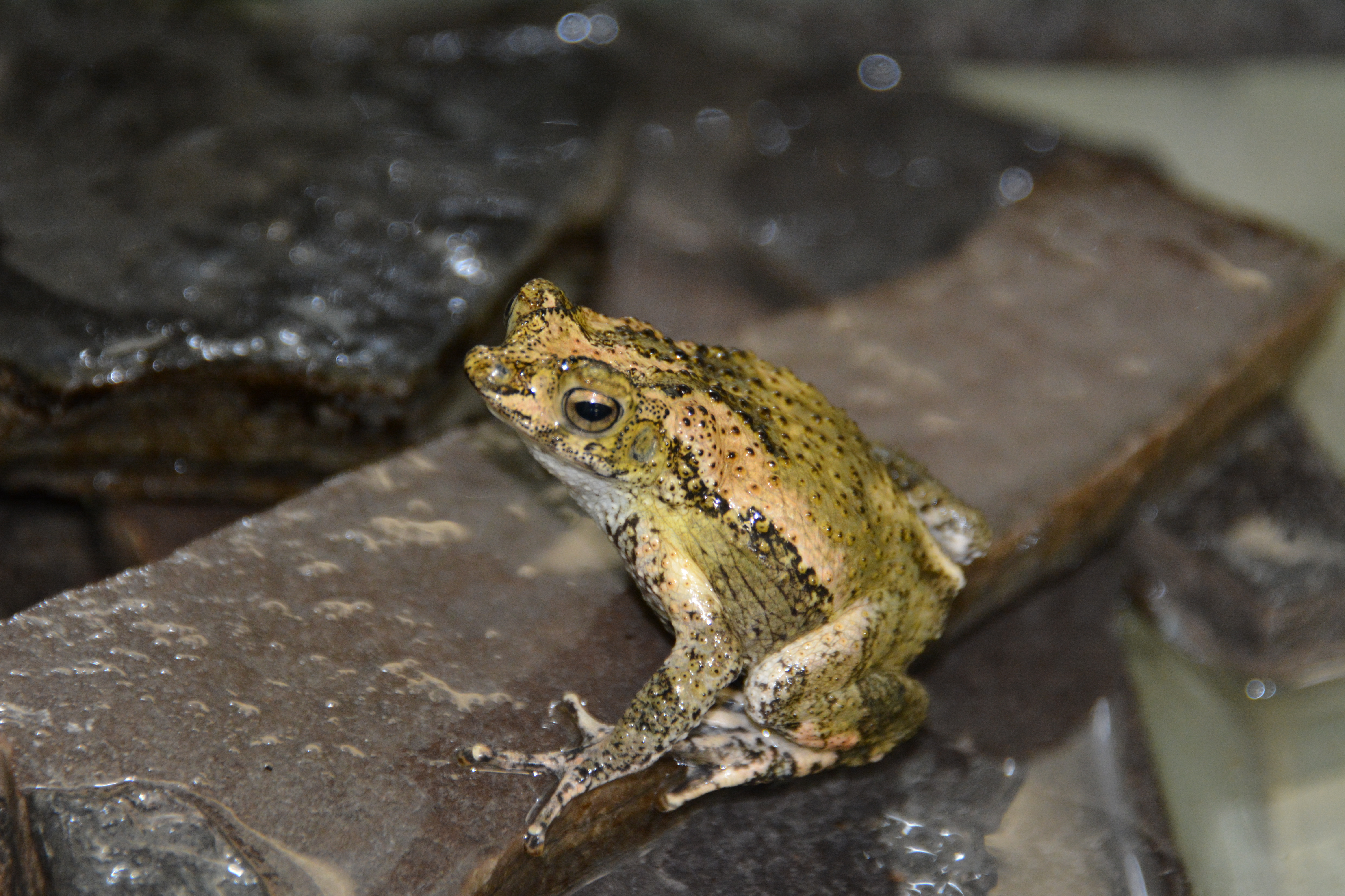 Tadpoles are the young of amphibians particularly frogs and toads