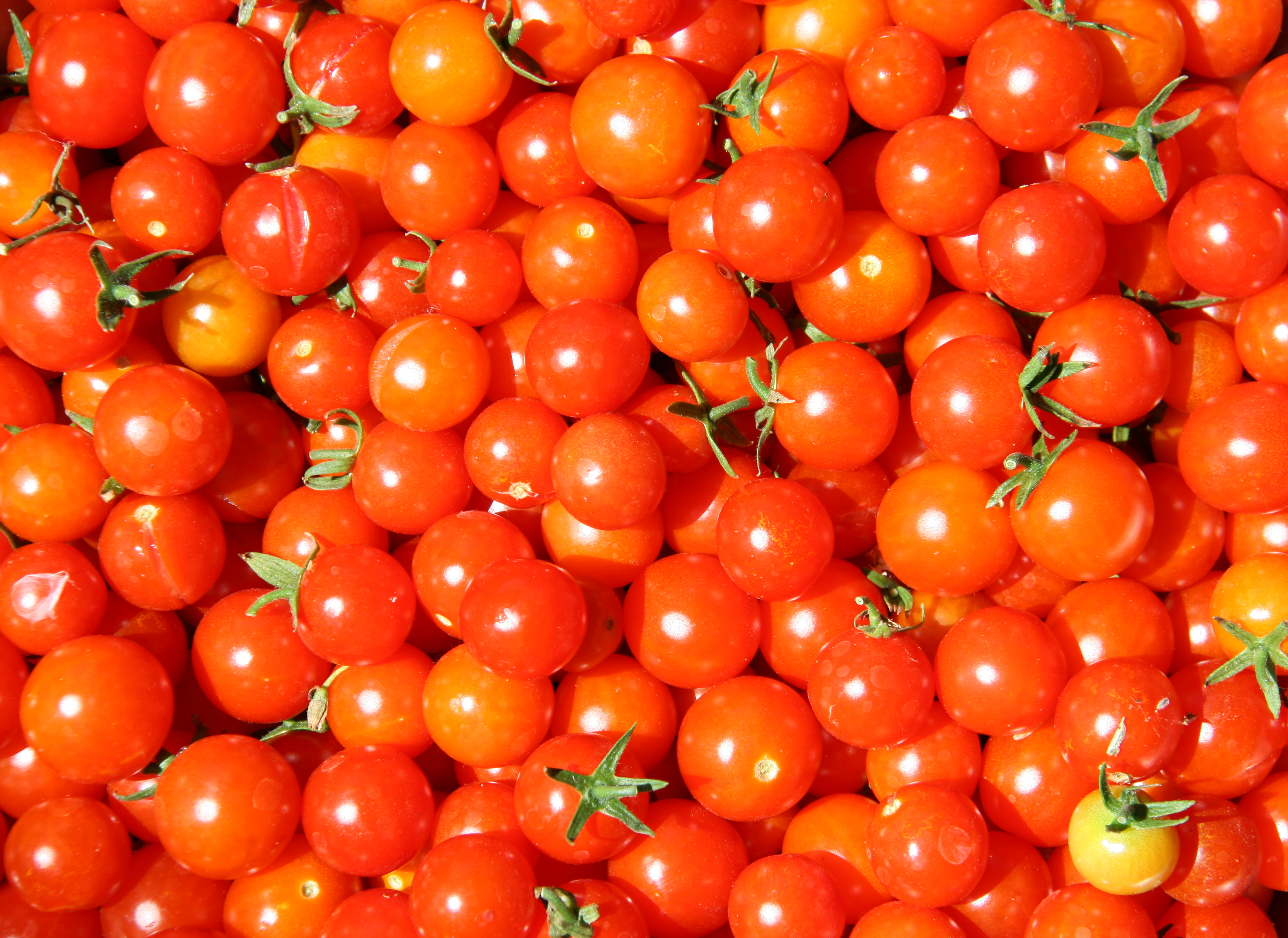 Tips & Tricks For Growing Tomatoes In Oregon - Paradise Ground ...